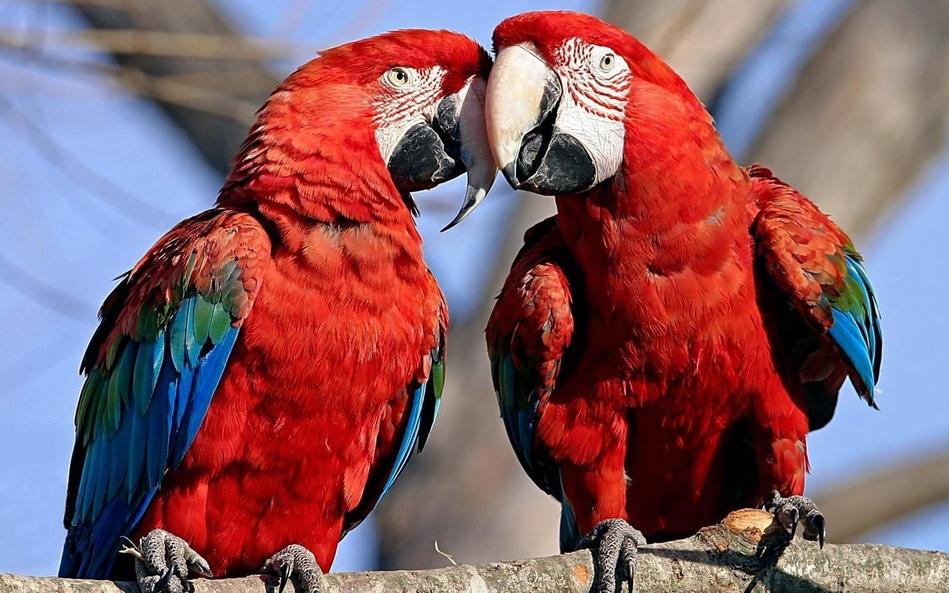 Free download Macaw background ID:46337 hd 1920x1200 for desktop