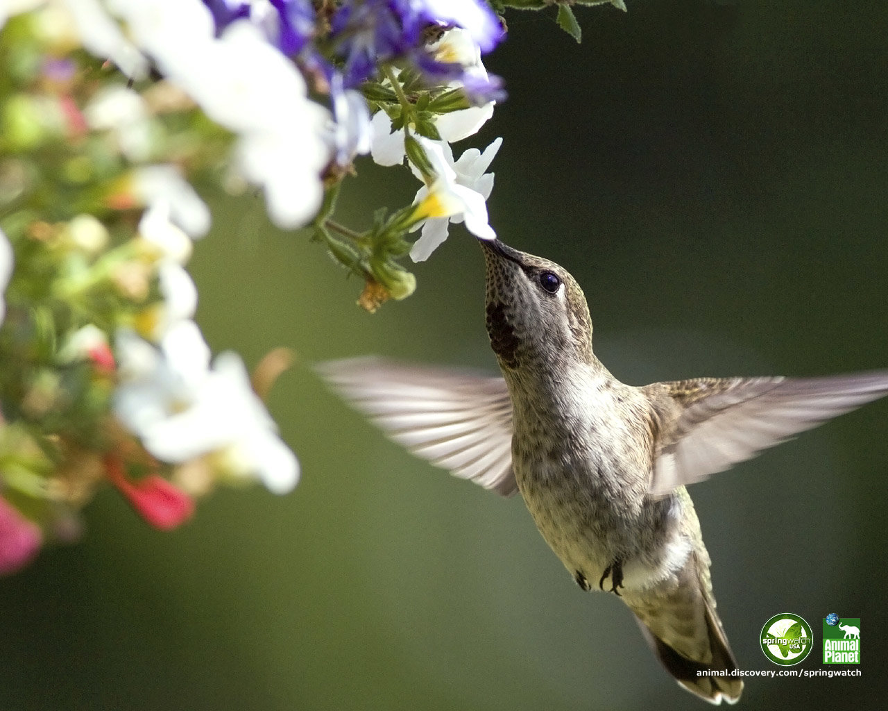 Free Hummingbird high quality background ID:215764 for hd 1280x1024 desktop
