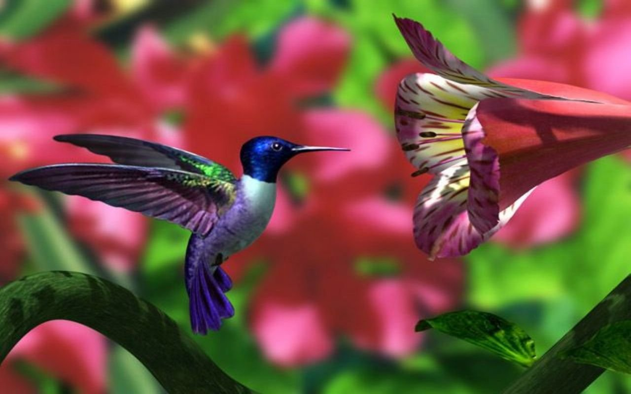 Best Hummingbird wallpaper ID:215637 for High Resolution hd 1280x800 PC