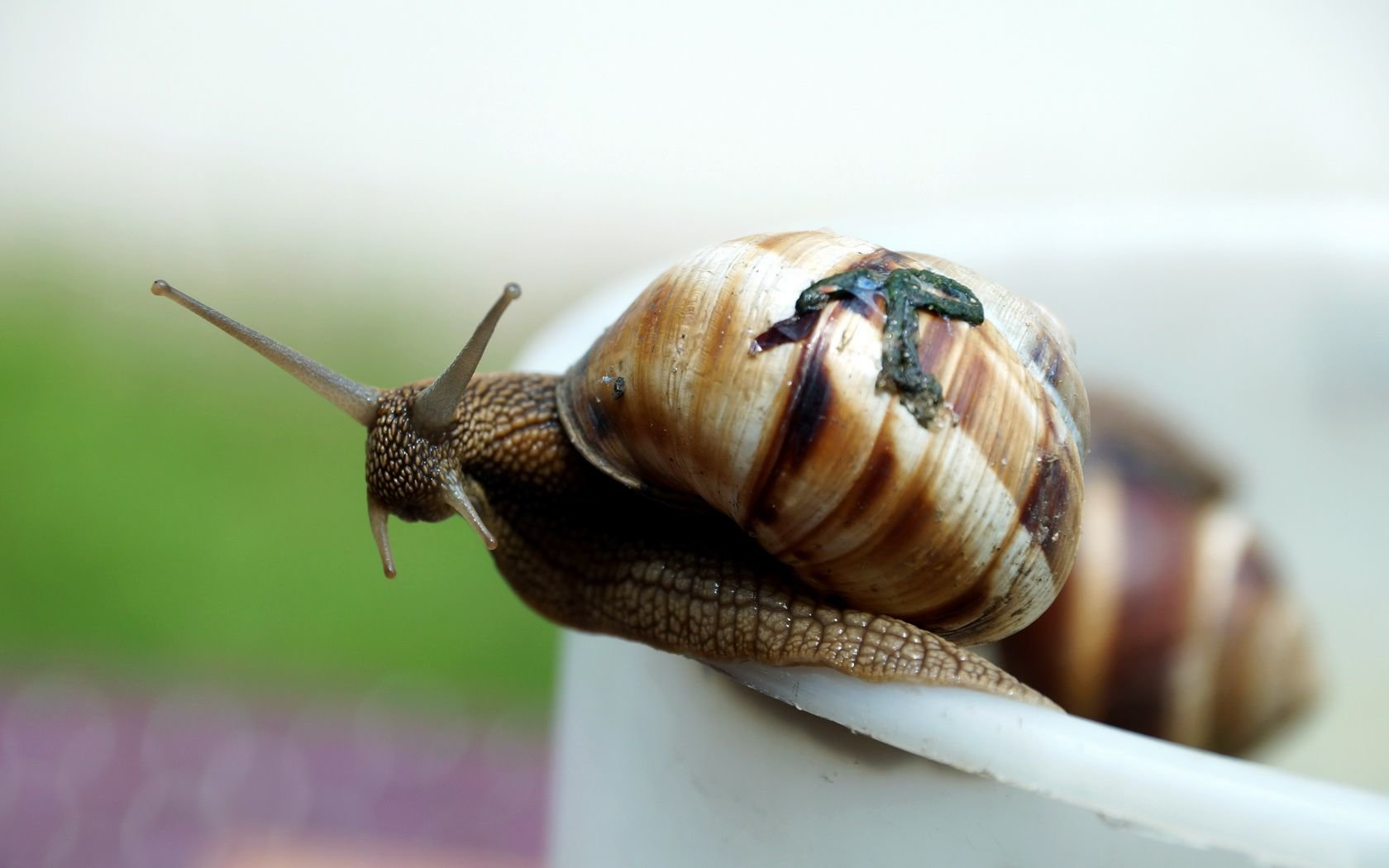 Free Snail high quality background ID:198881 for hd 1680x1050 PC
