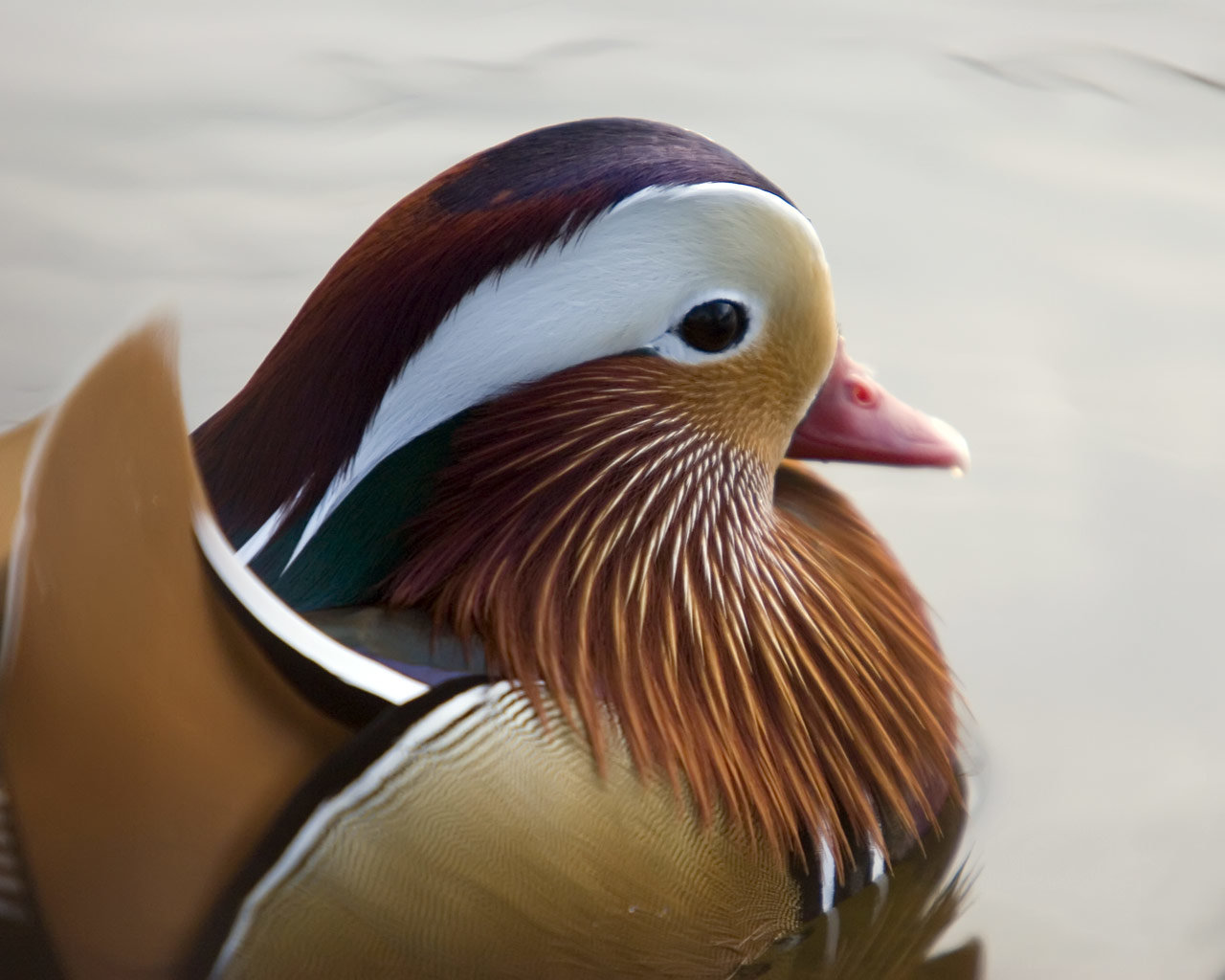 High resolution Mandarin Duck hd 1280x1024 wallpaper ID:100762 for computer