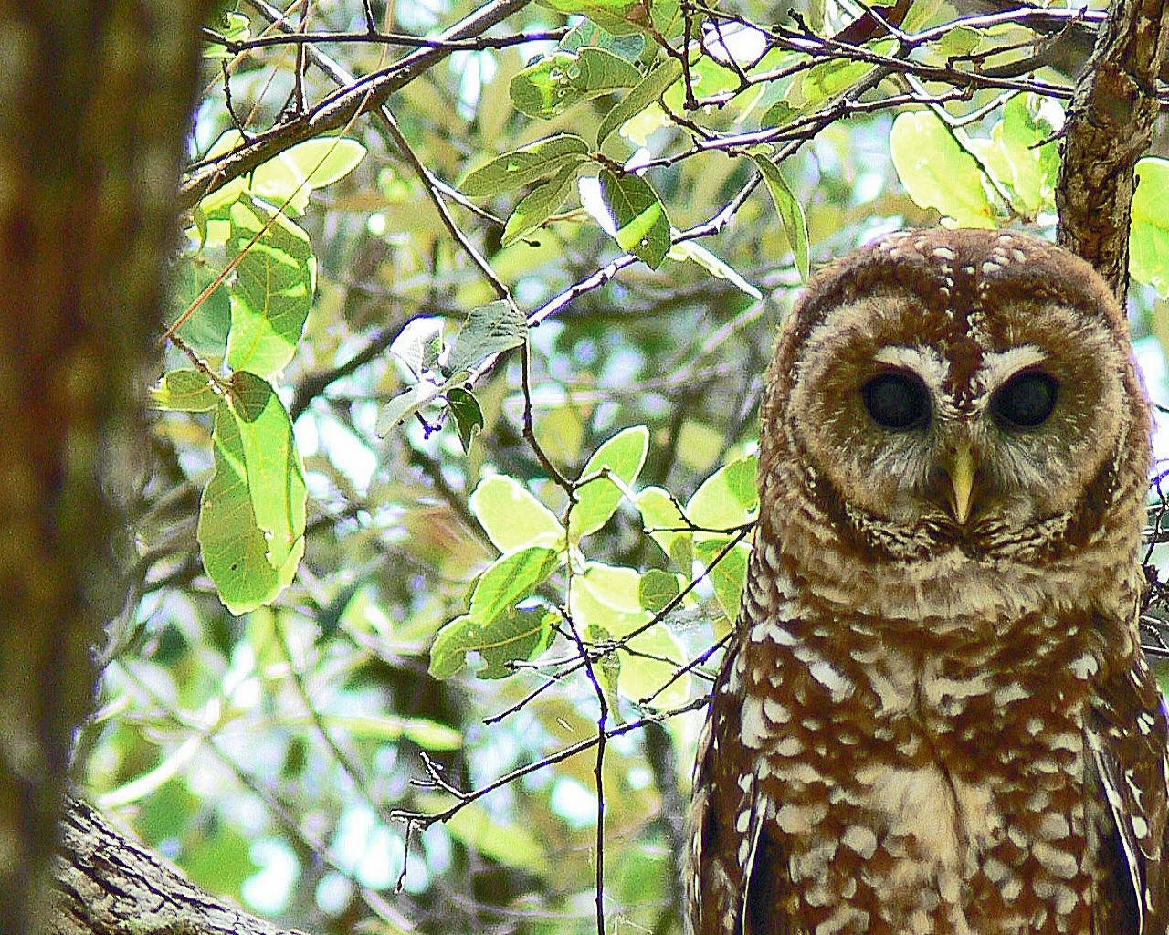 Free Owl high quality wallpaper ID:236901 for hd 1280x1024 PC