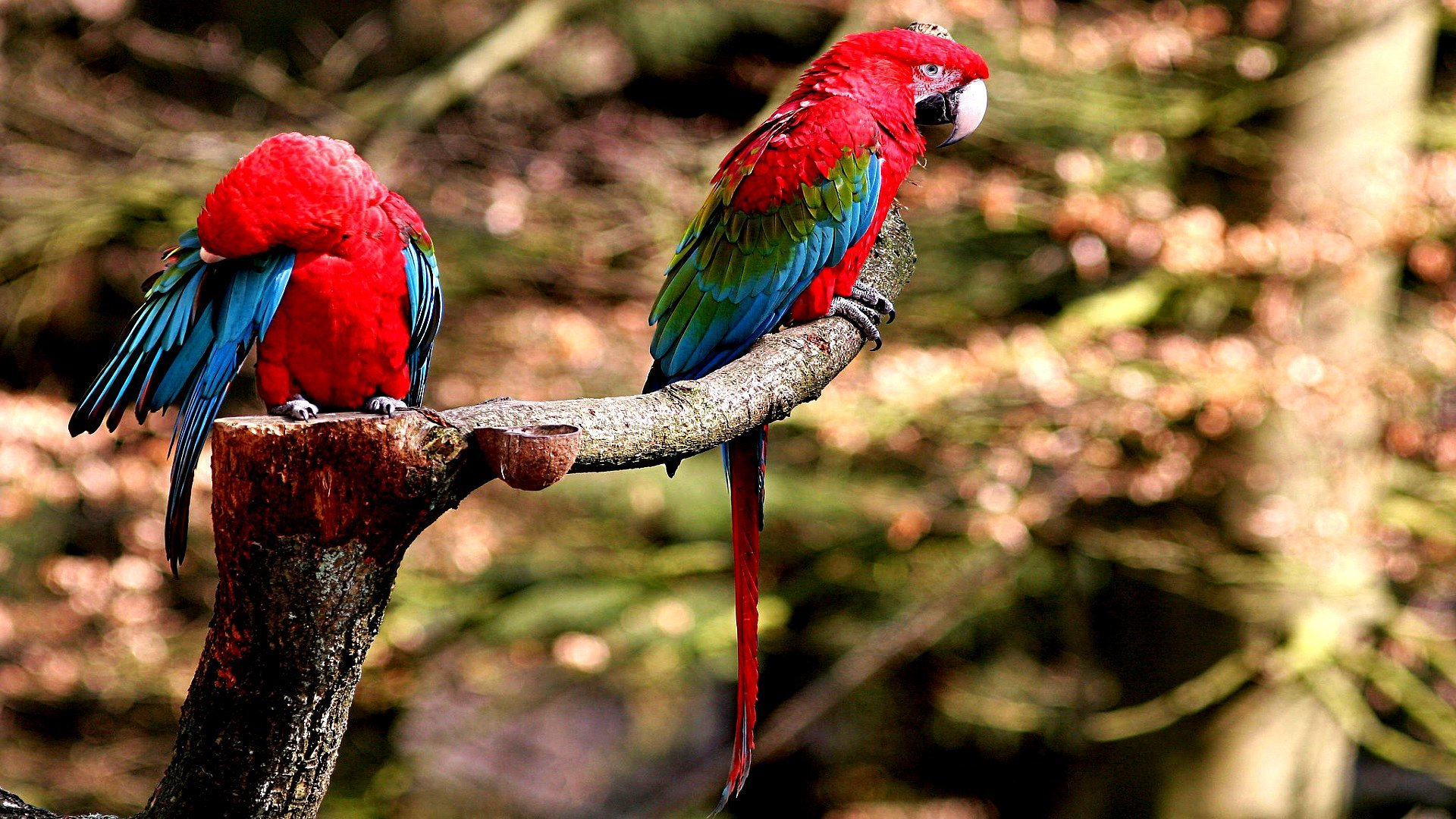 Free Macaw high quality background ID:46356 for 1080p desktop
