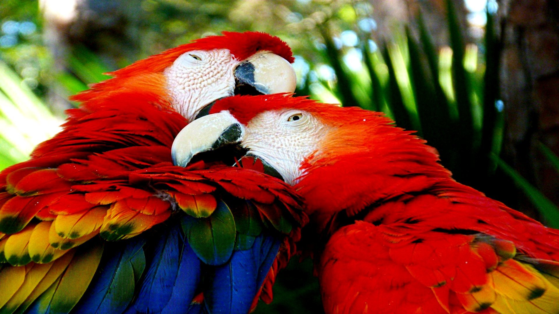 Best Macaw background ID:46386 for High Resolution full hd PC