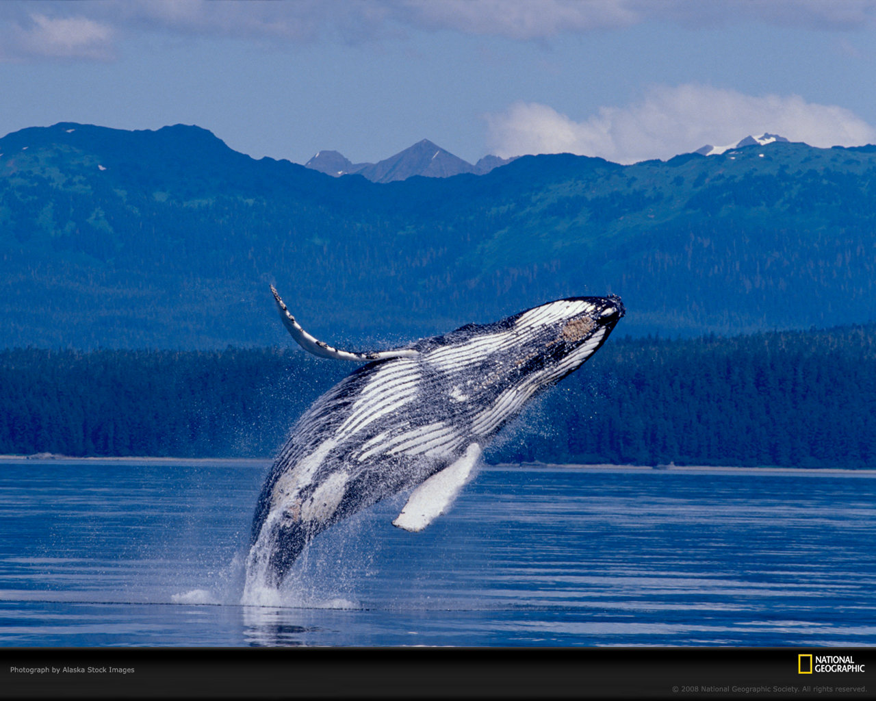 Awesome Whale free background ID:463282 for hd 1280x1024 computer