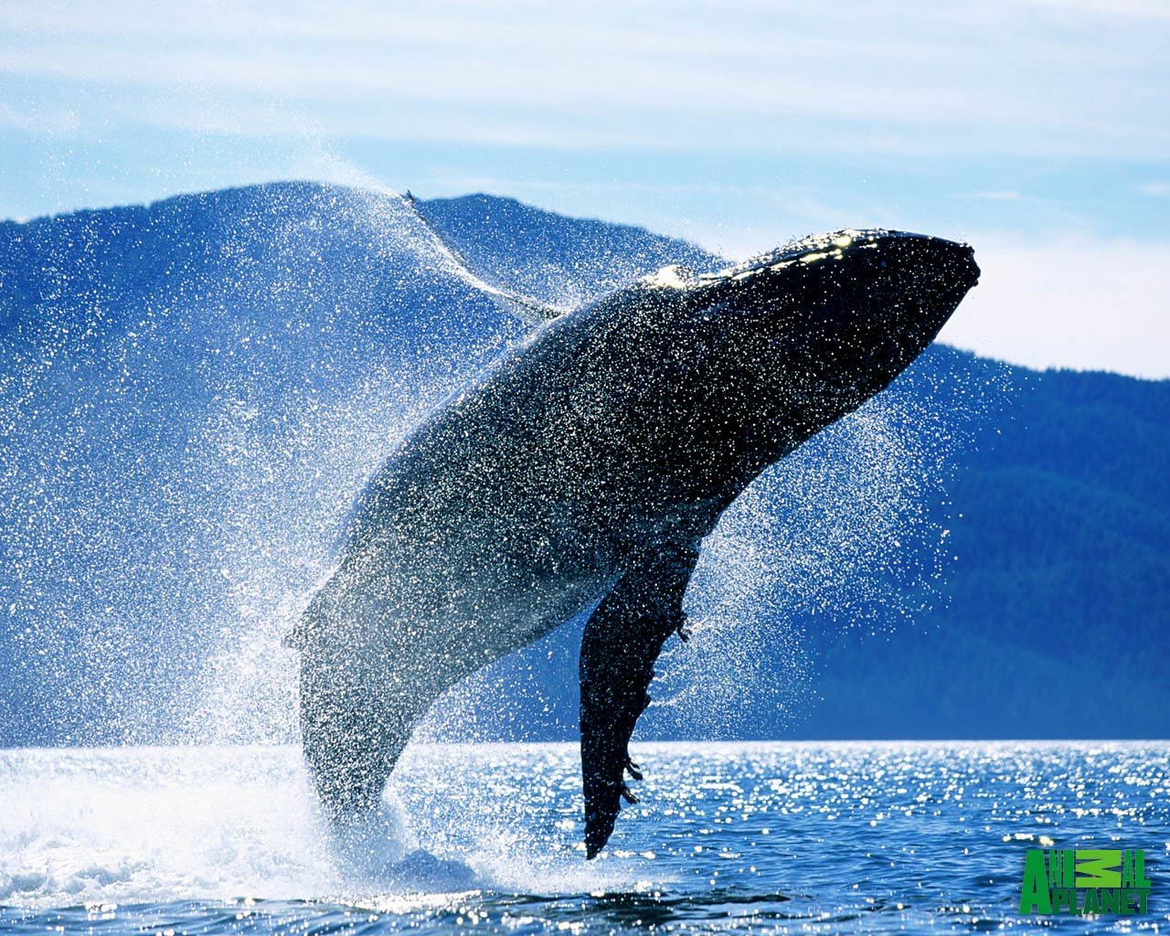 Download hd 1280x1024 Whale computer background ID:463291 for free