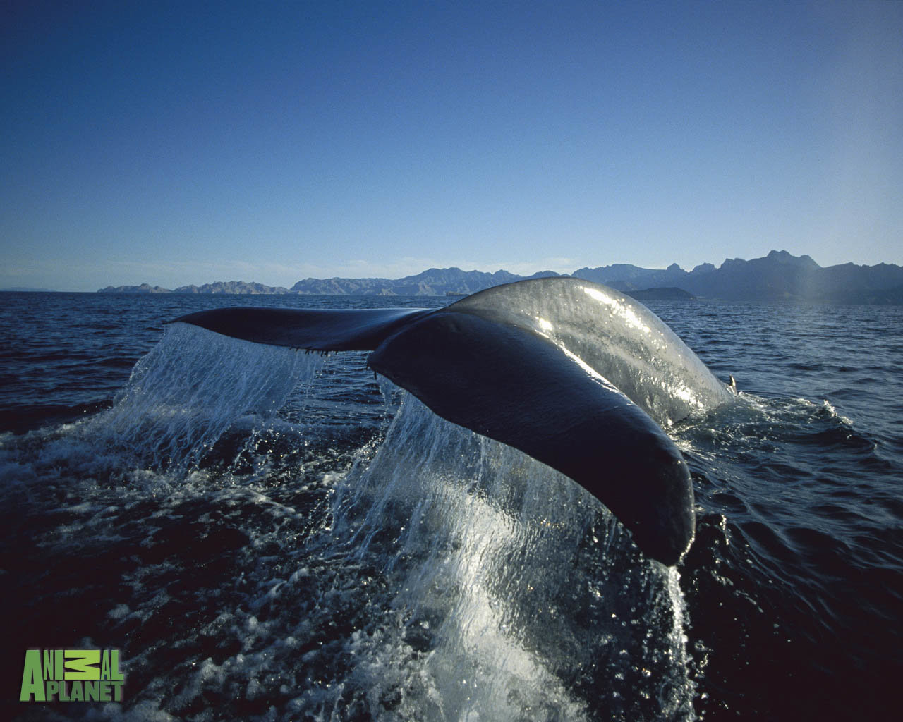 Best Whale wallpaper ID:463280 for High Resolution hd 1280x1024 PC