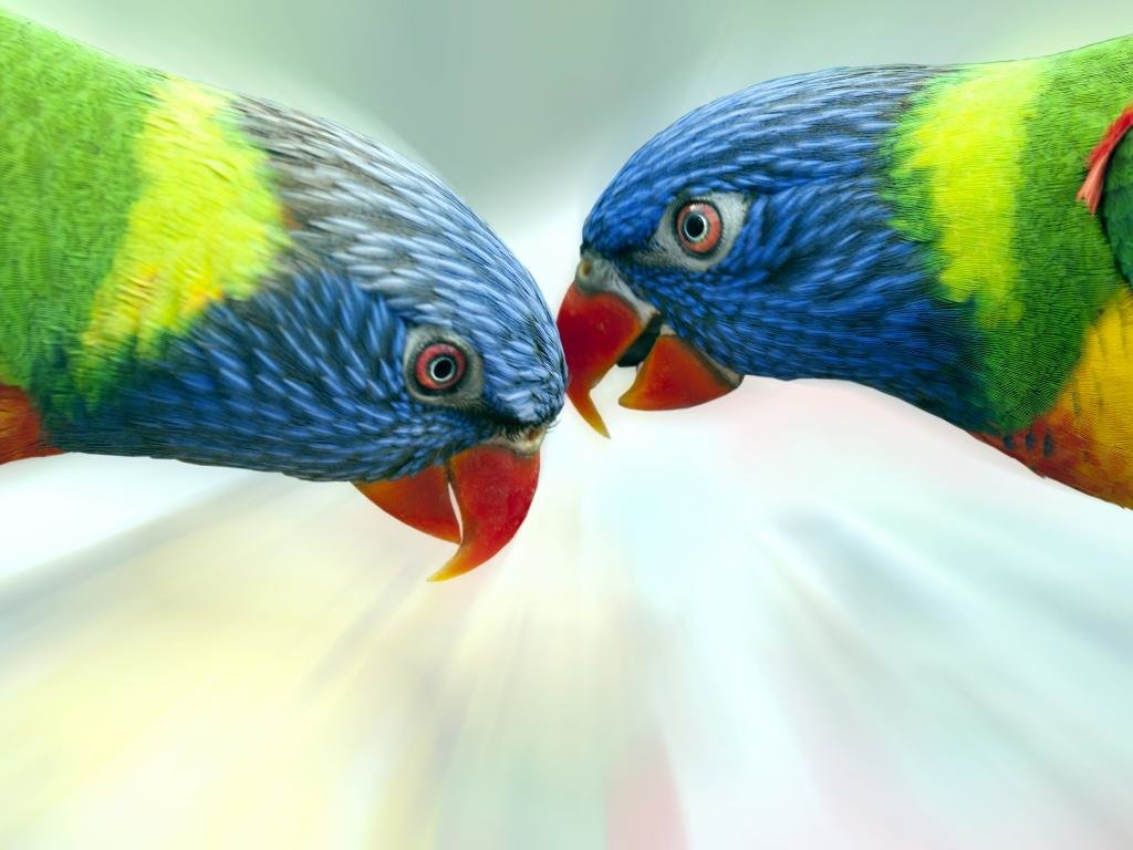 Free download Rainbow Lorikeet background ID:10134 hd 1024x768 for PC