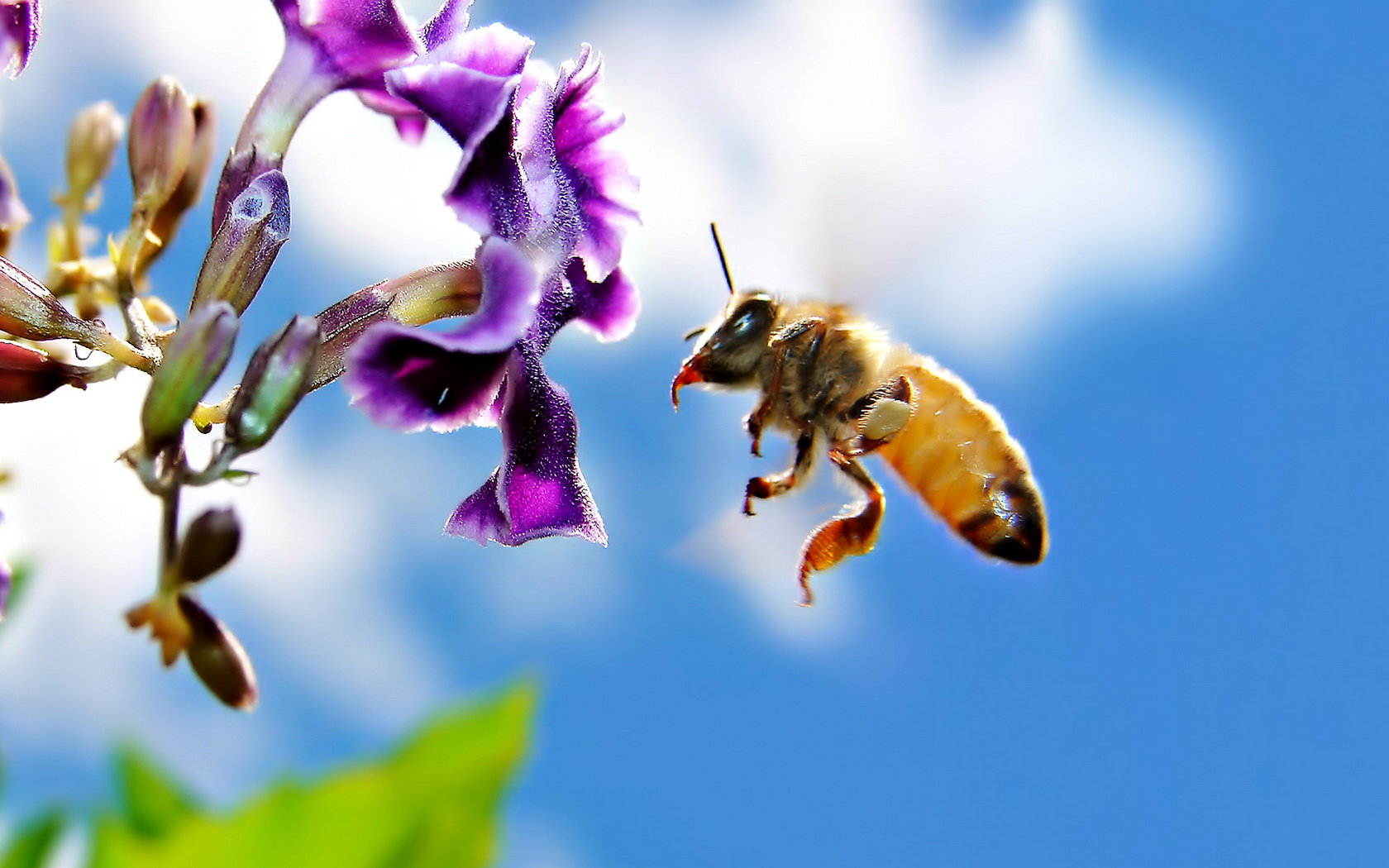 Free download Bee wallpaper ID:460620 hd 1680x1050 for desktop