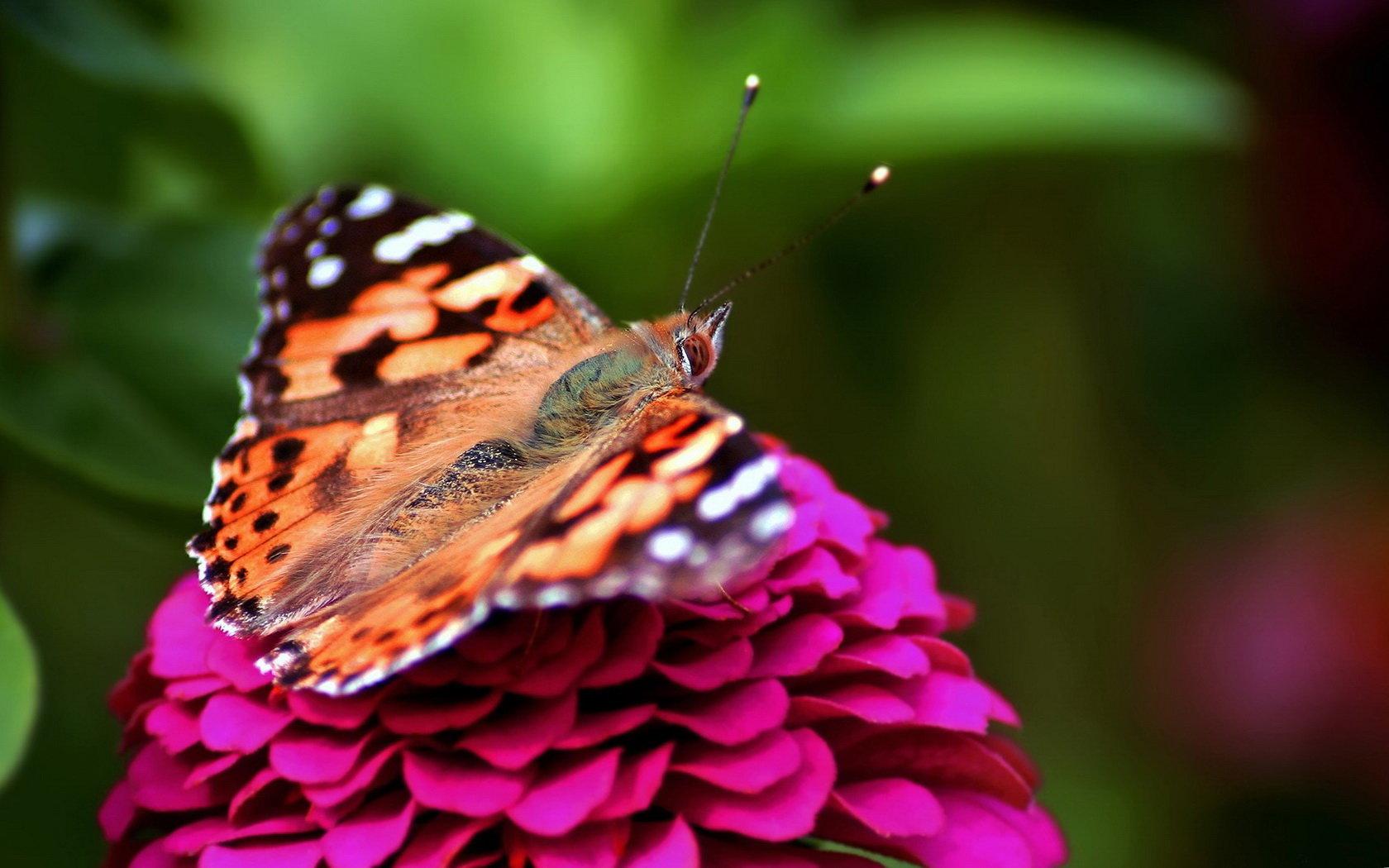 Разные бабочки  № 2033716  скачать