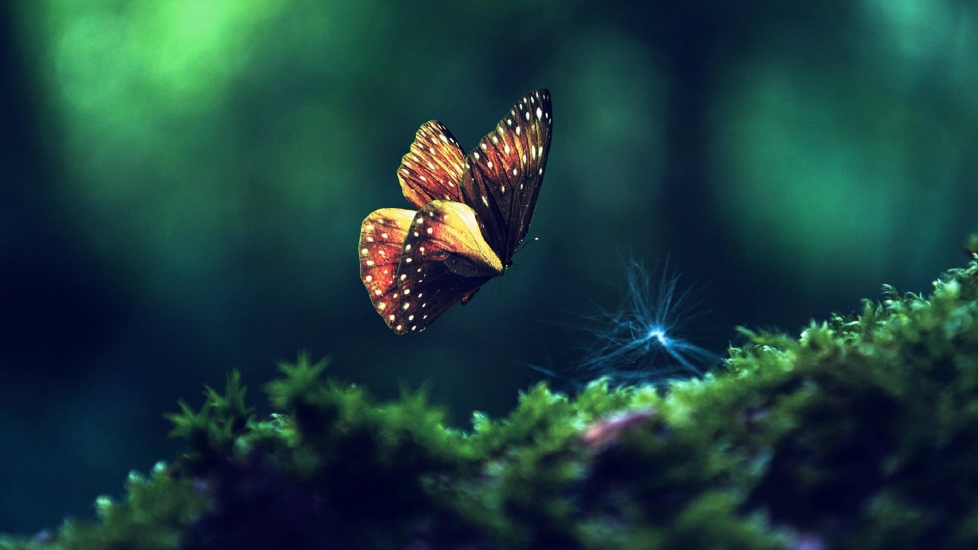 Download Full Hd 1080p Butterfly Desktop Wallpaper ID167530 For Free