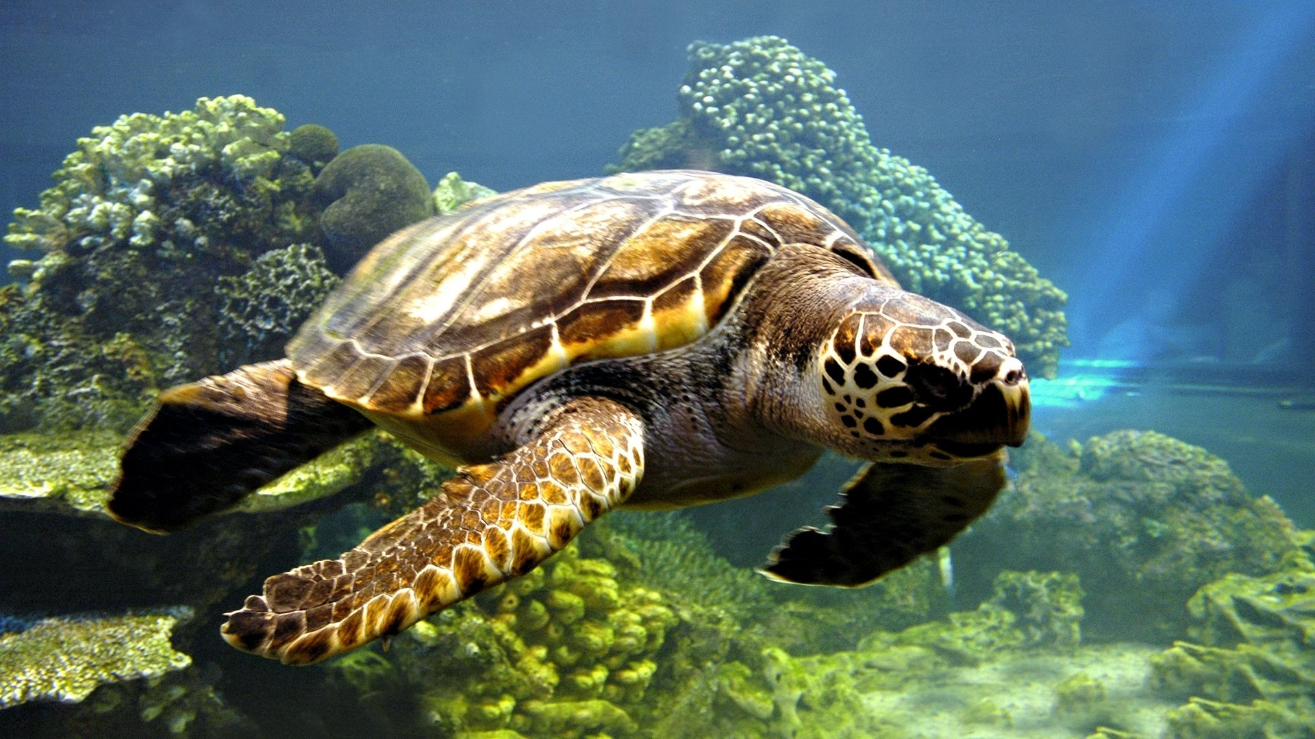 Free Turtle high quality wallpaper ID:29776 for full hd desktop