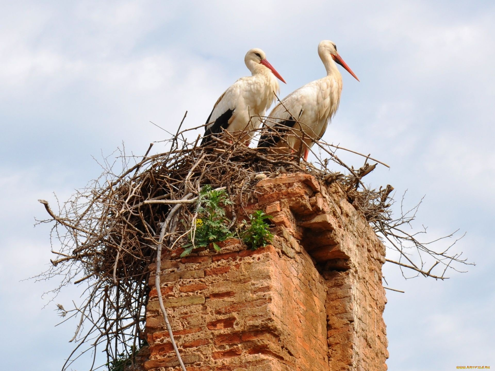 High resolution White Stork hd 1920x1440 background ID:9594 for desktop