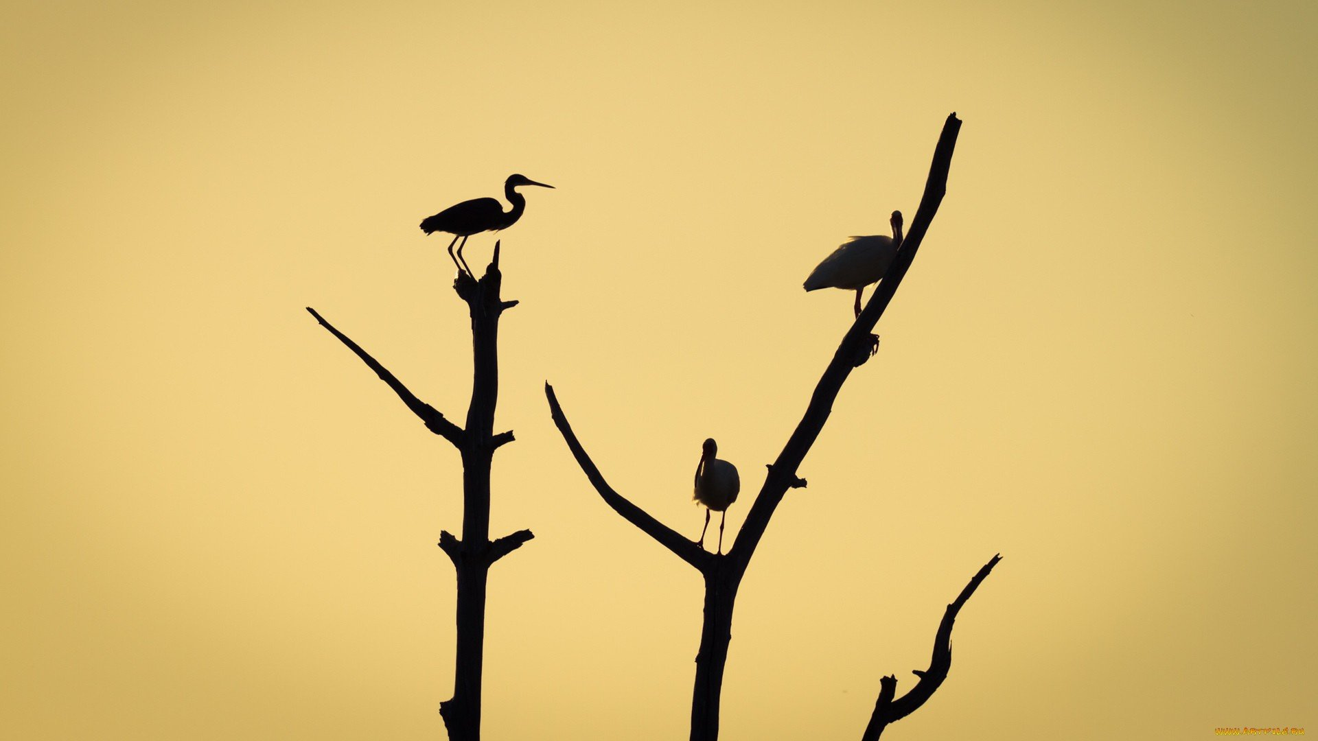 Awesome White Stork free background ID:9620 for 1080p PC