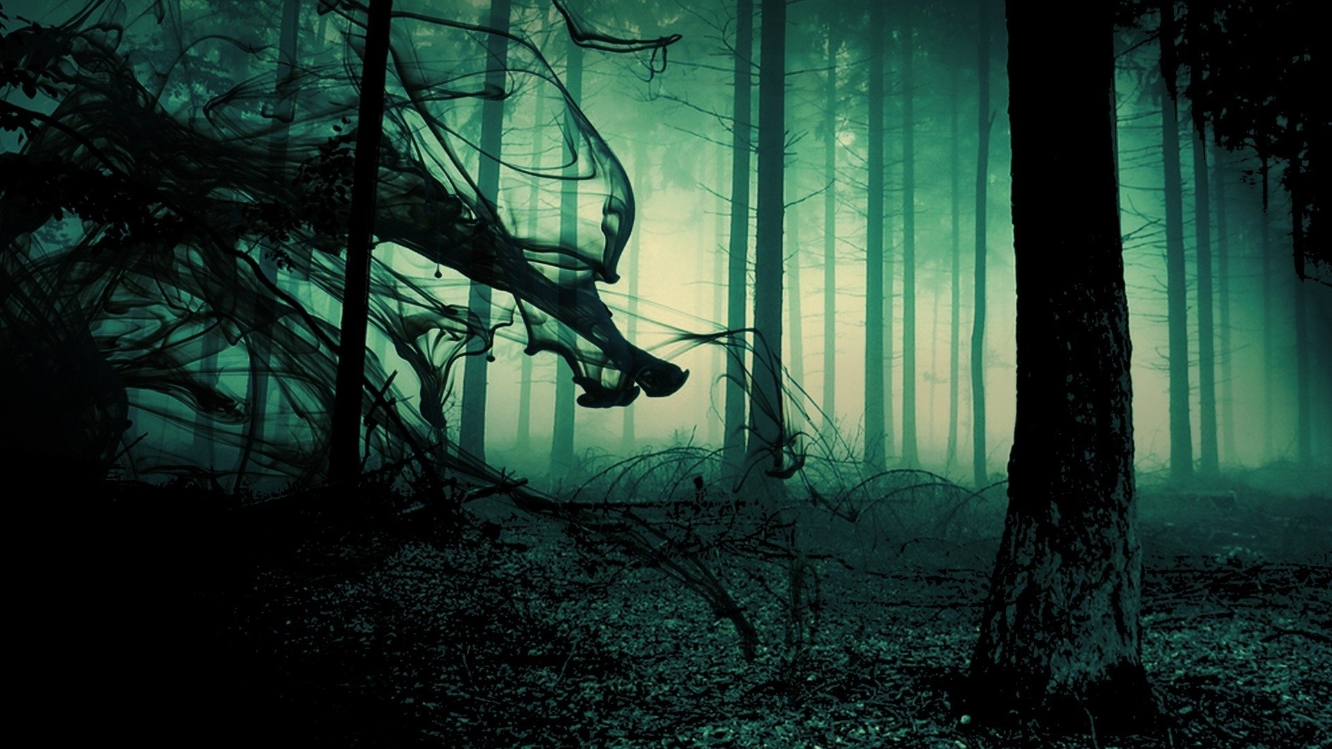 dark forest wallpapers hd for desktop backgrounds