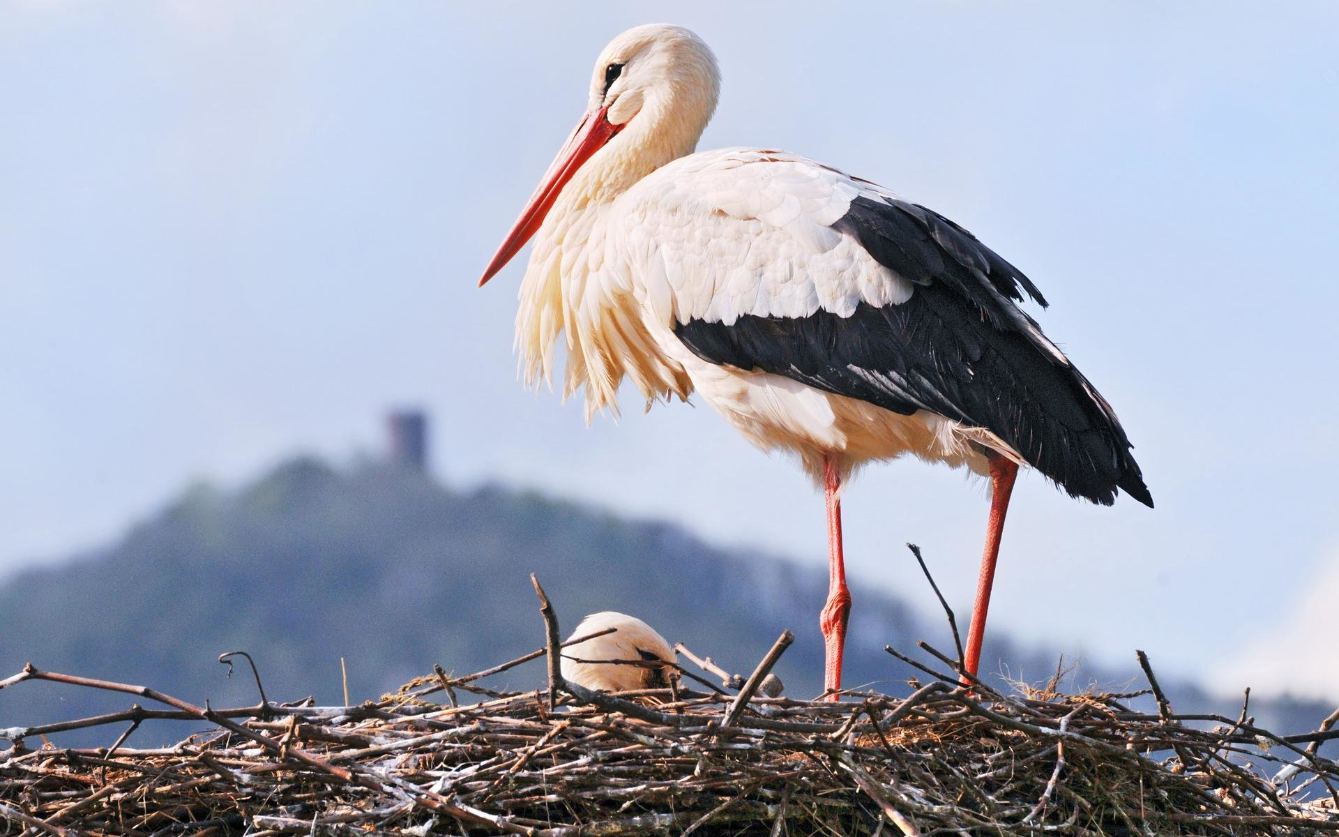 Free White Stork high quality background ID:9580 for hd 1920x1200 desktop