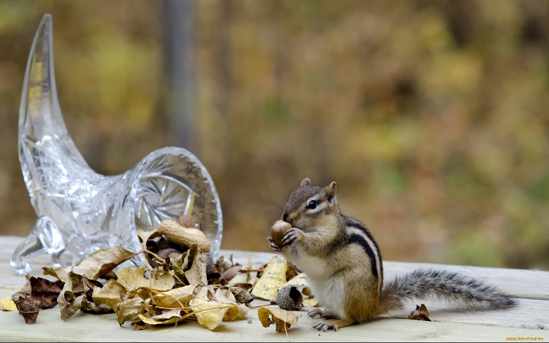 бурундук с арахисом  № 136405 бесплатно