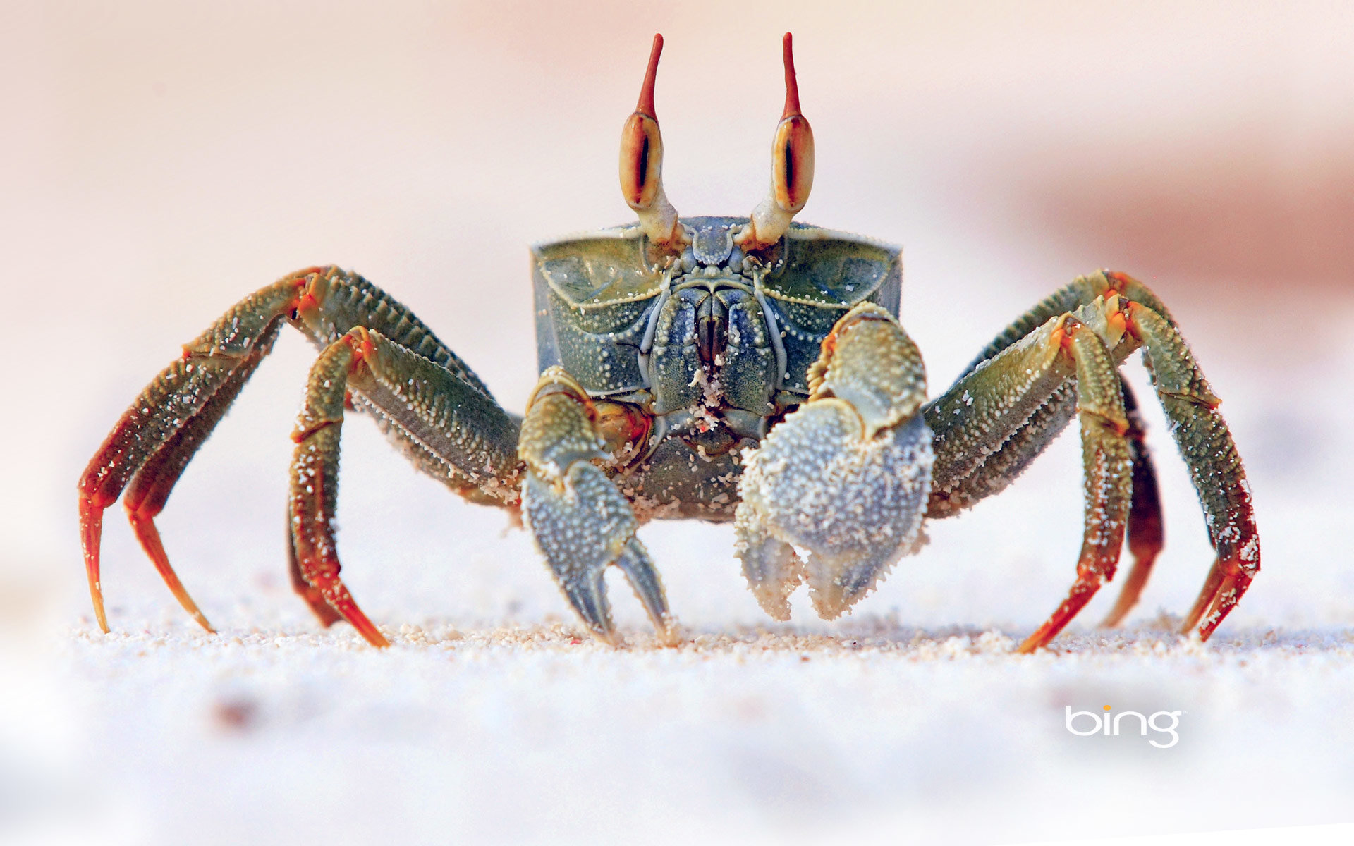 Best Crab background ID:294286 for High Resolution hd 1920x1200 PC