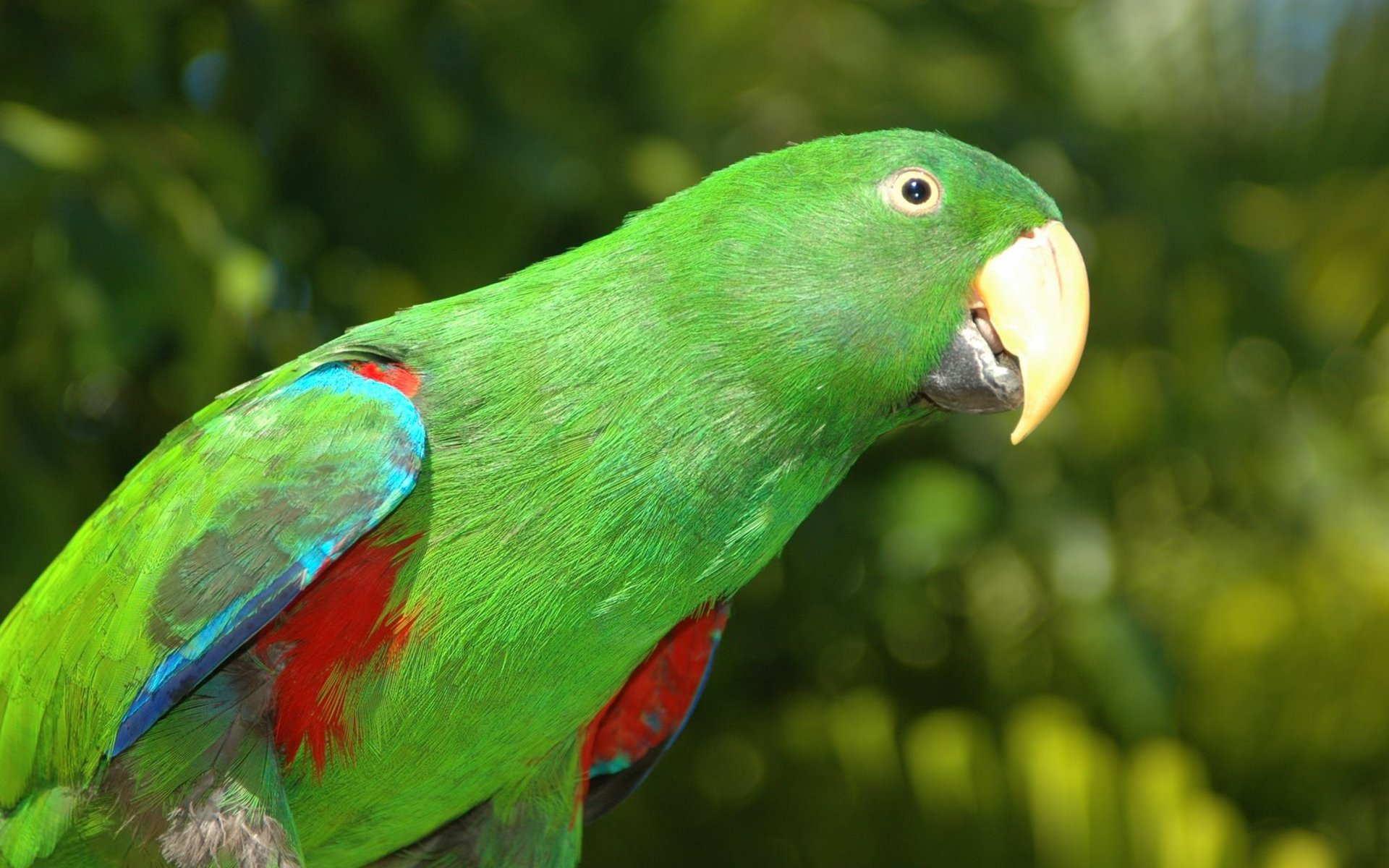 Download hd 1920x1200 Parrot PC background ID:25743 for free
