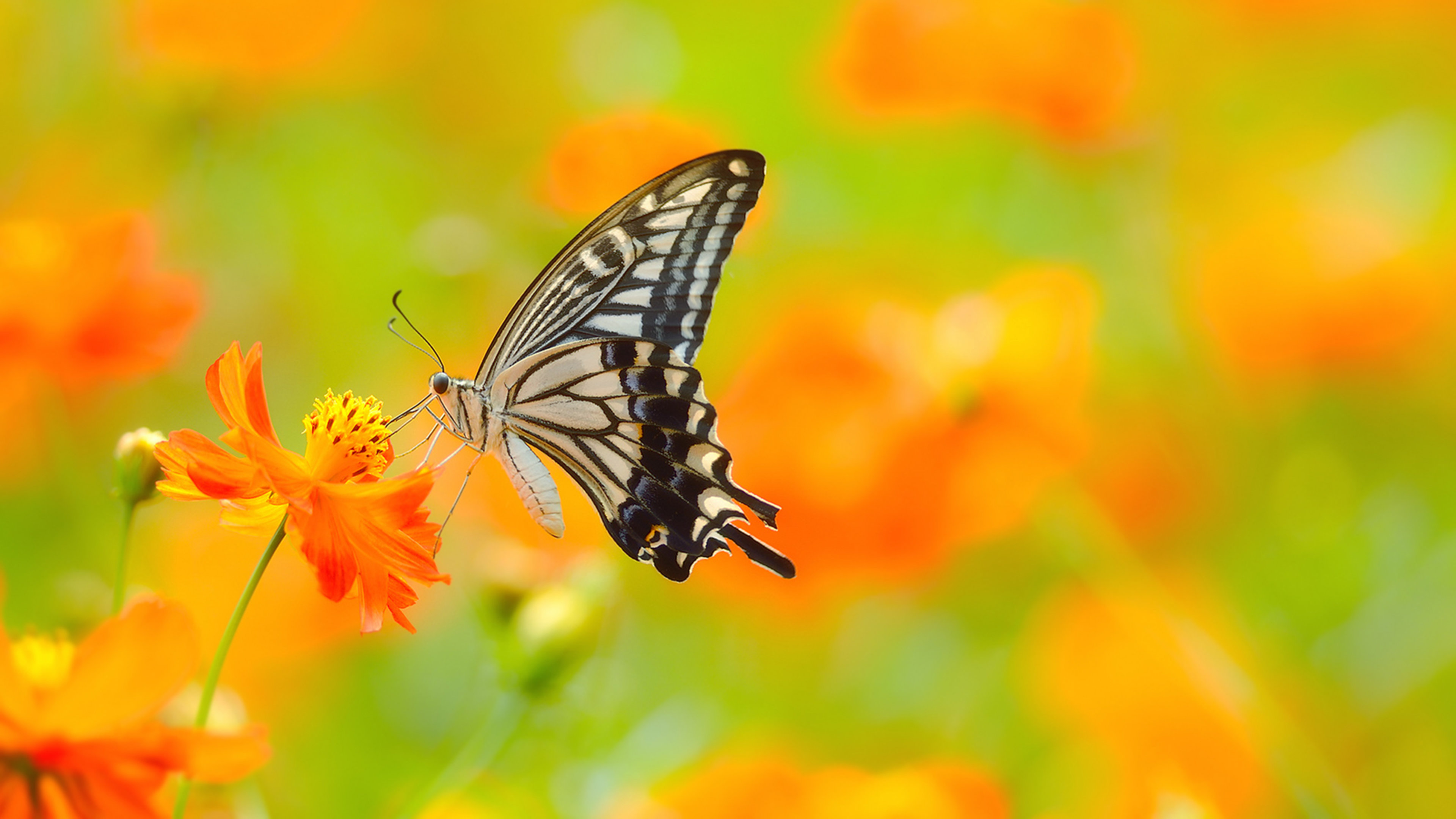 Free download Butterfly background ID:167525 uhd 4k for desktop