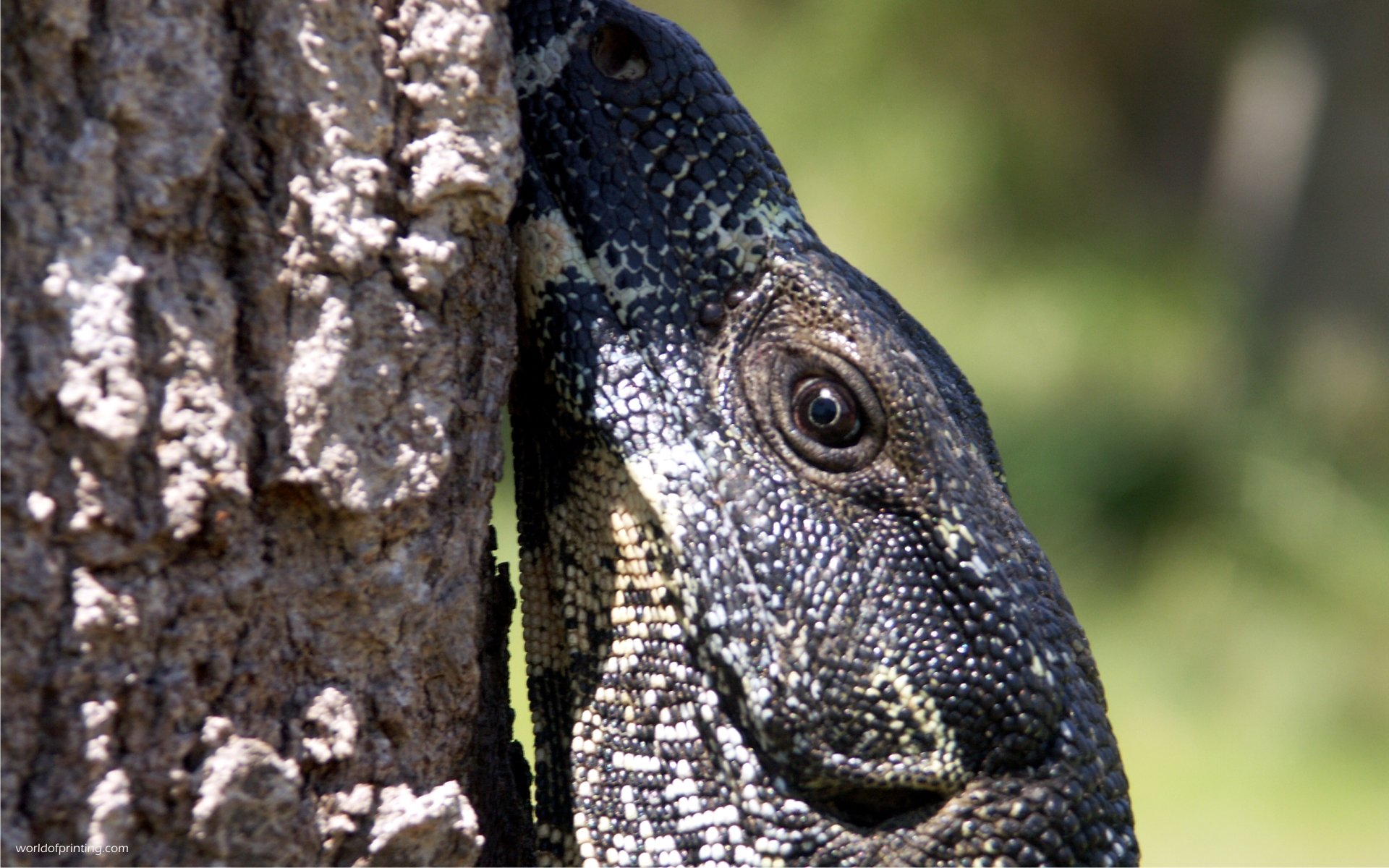 Download hd 1920x1200 Monitor Lizard PC wallpaper ID:450149 for free