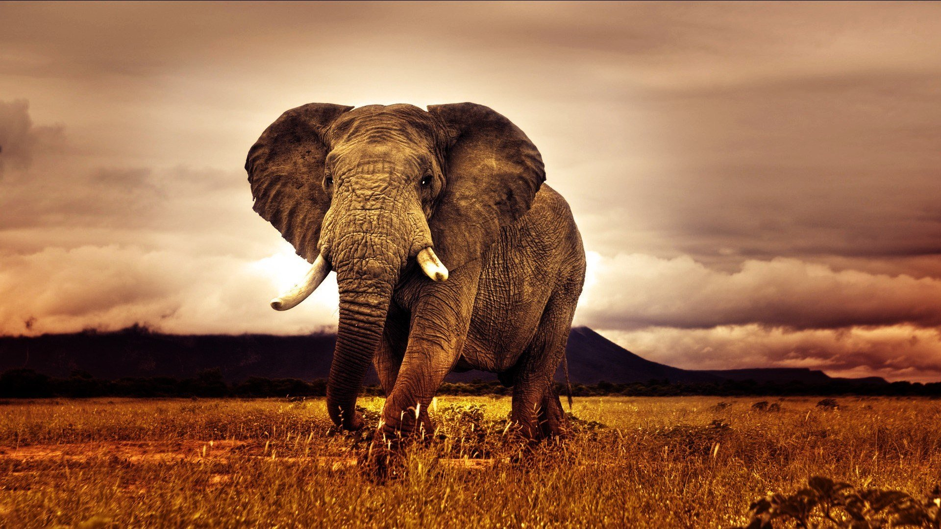 Free download Elephant background ID:132593 full hd 1920x1080 for desktop