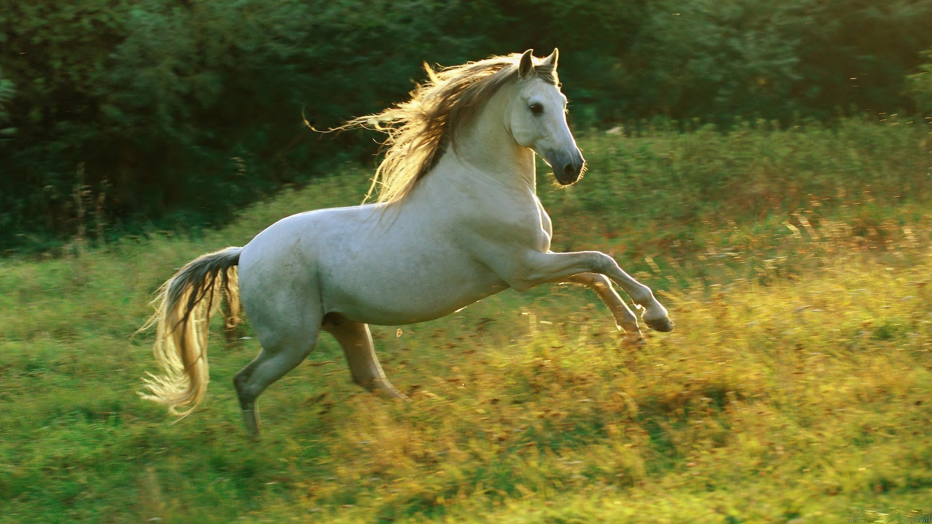 Awesome Horse free background ID:23294 for hd 1920x1080 computer