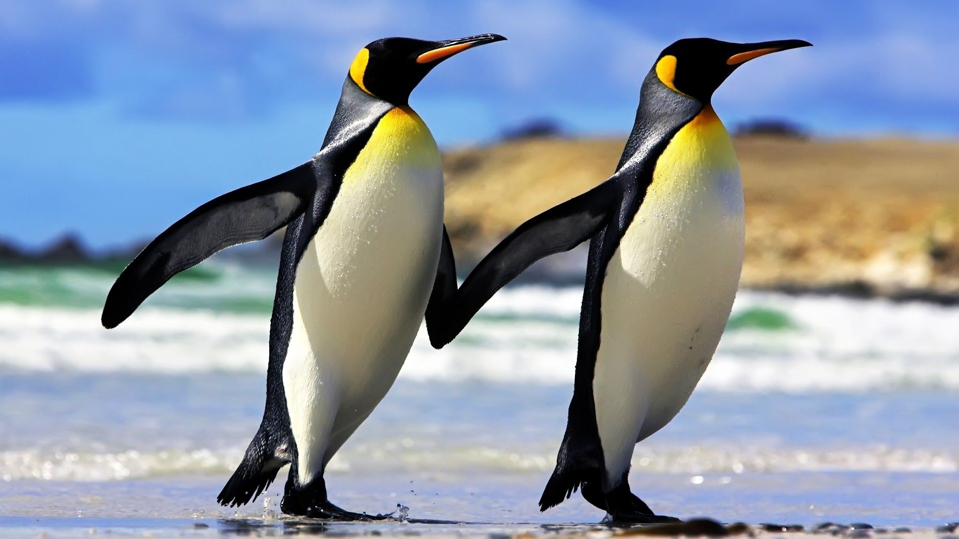 Best Penguin wallpaper ID:149246 for High Resolution full hd 1920x1080 desktop