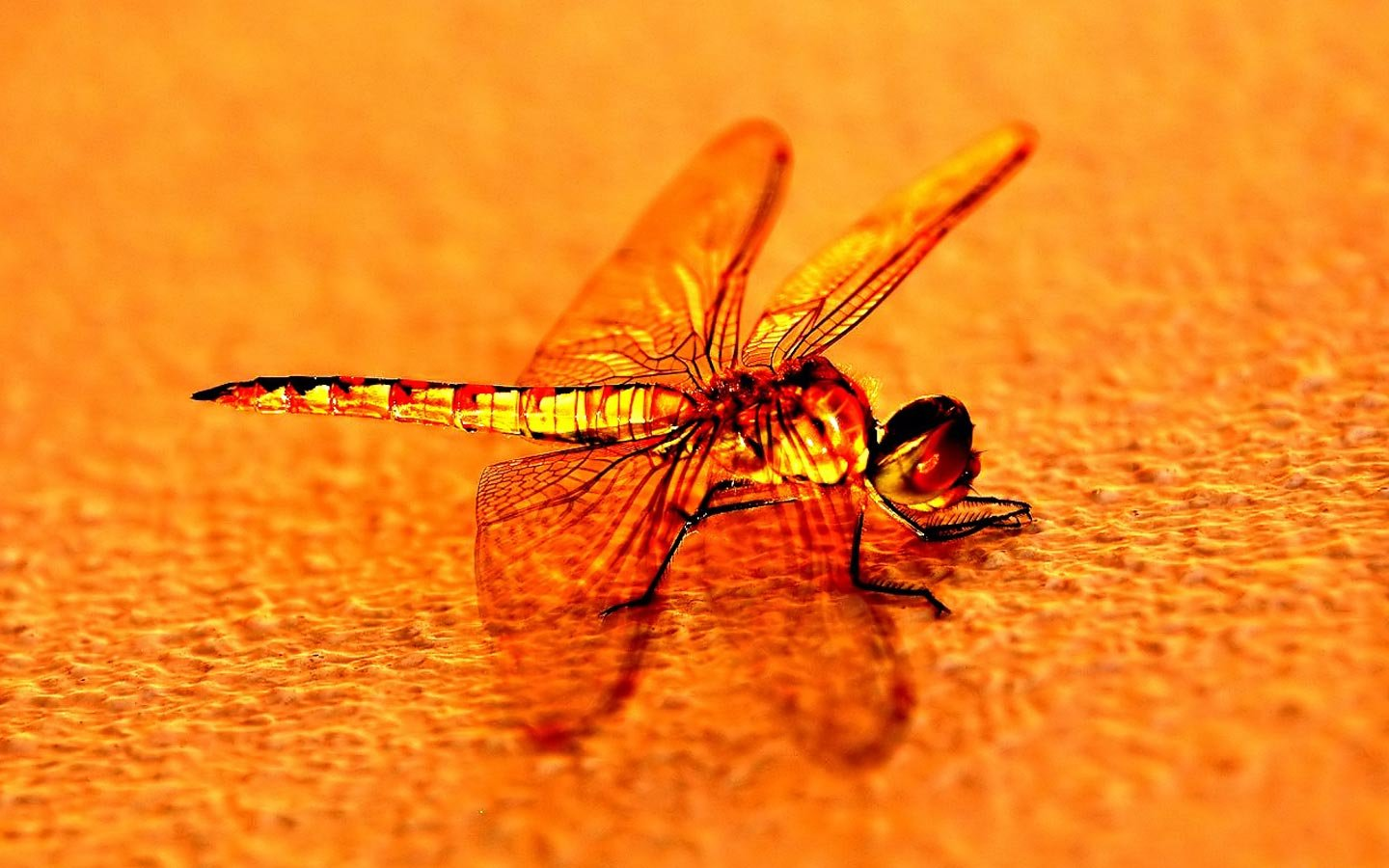 Awesome Dragonfly free wallpaper ID:467685 for hd 1440x900 computer