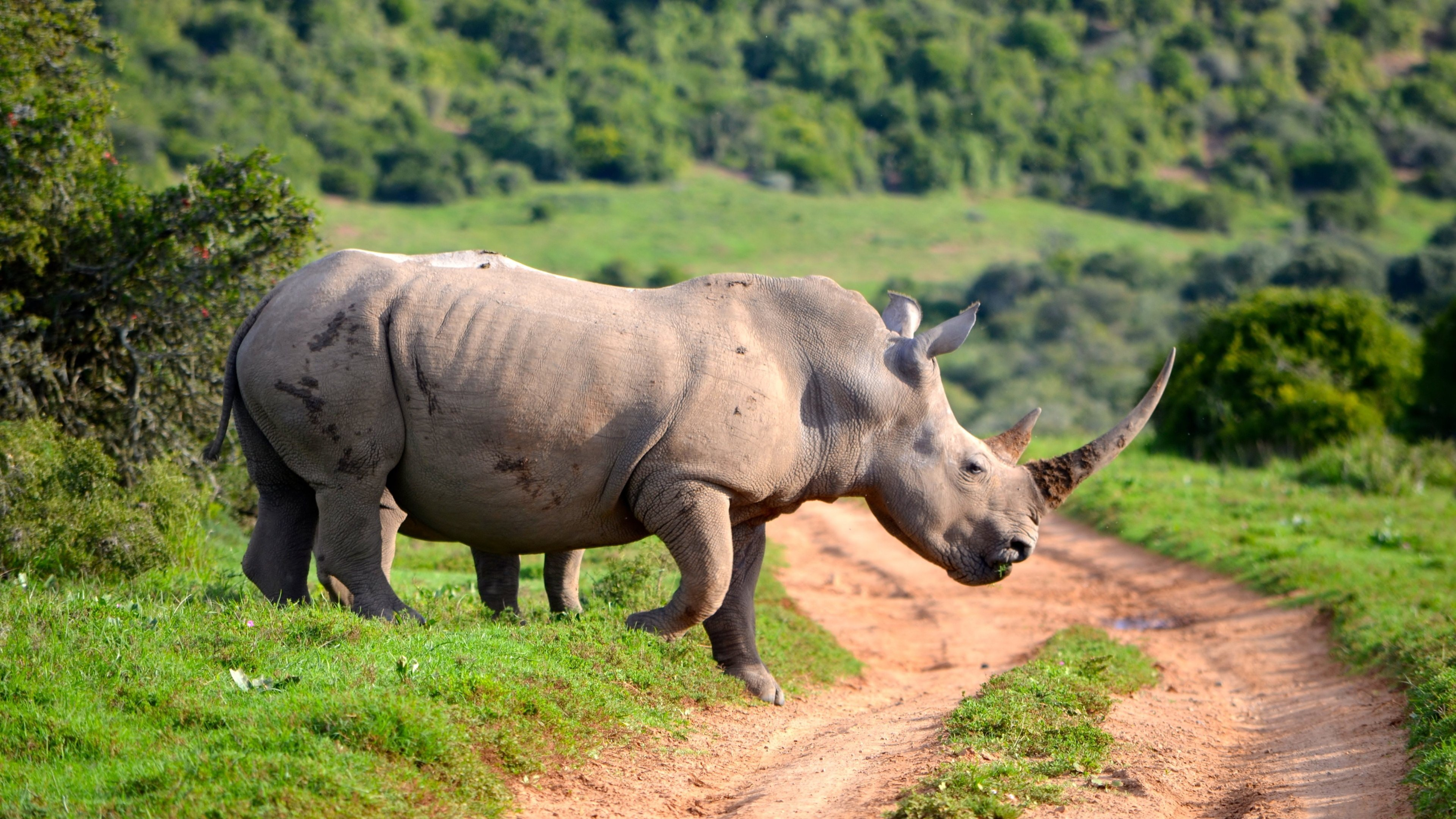 Download uhd 4k Rhino PC background ID:20084 for free