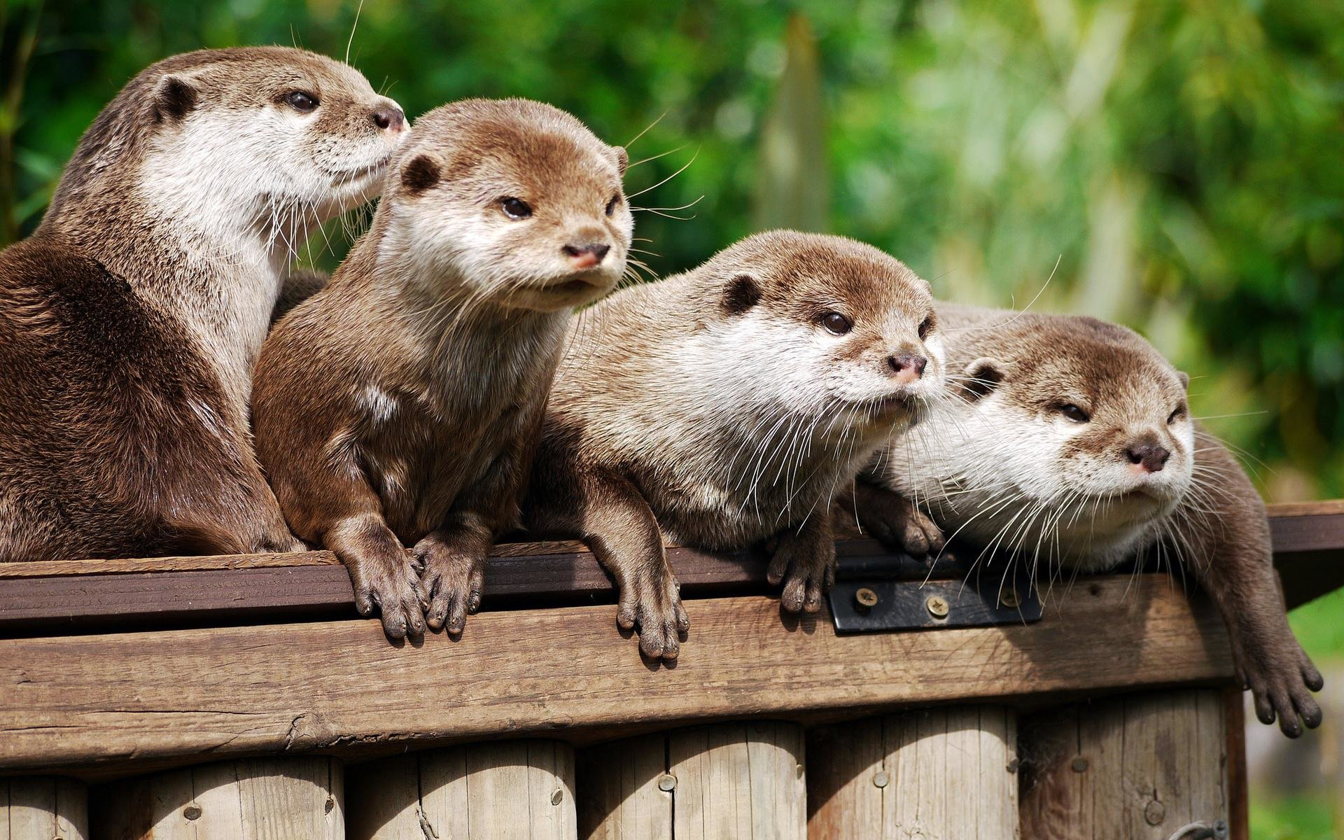 Free Otter high quality wallpaper ID:207595 for hd 1920x1200 desktop