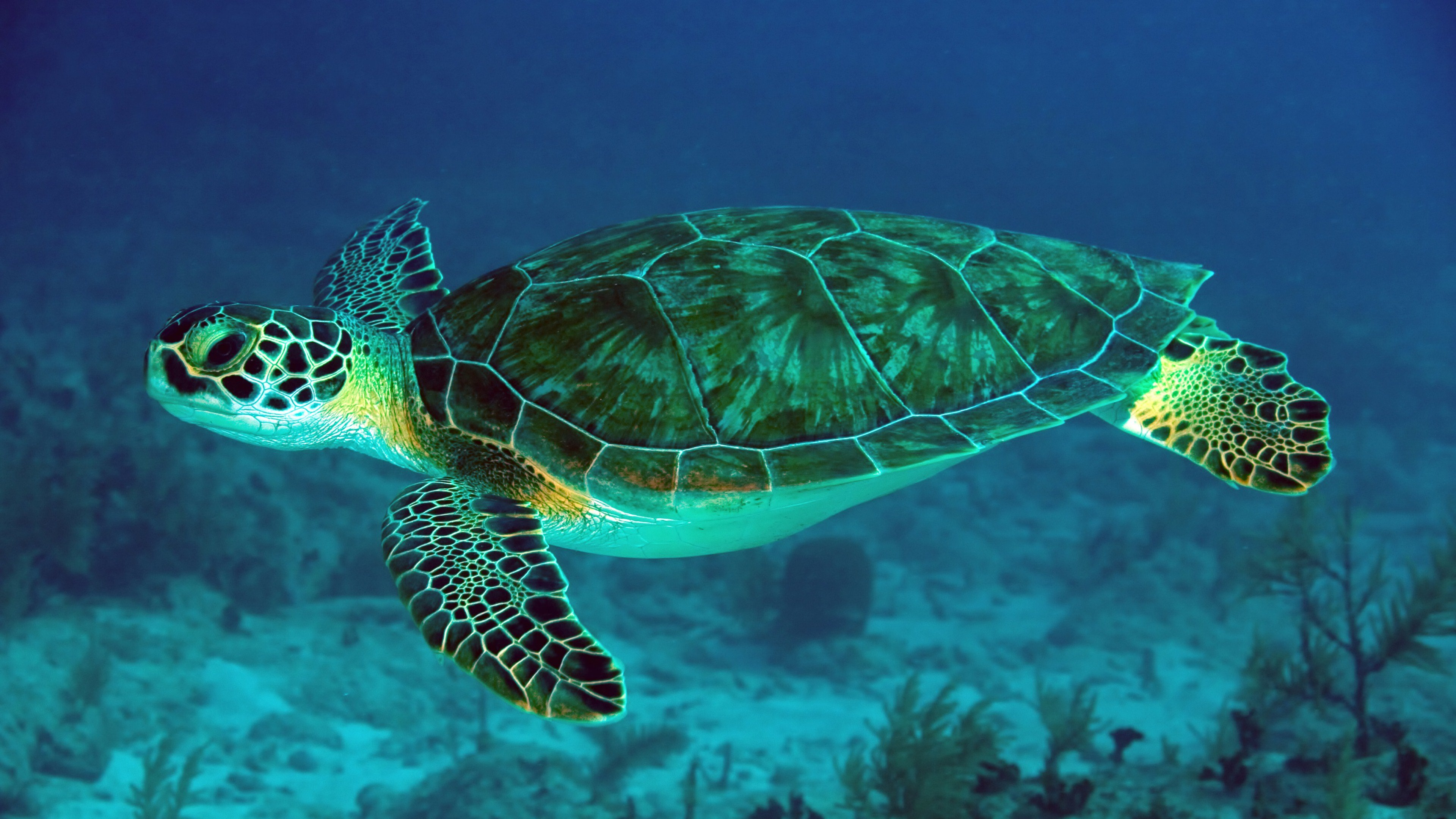 Best Sea Turtle wallpaper ID:150743 for High Resolution hd 4k computer