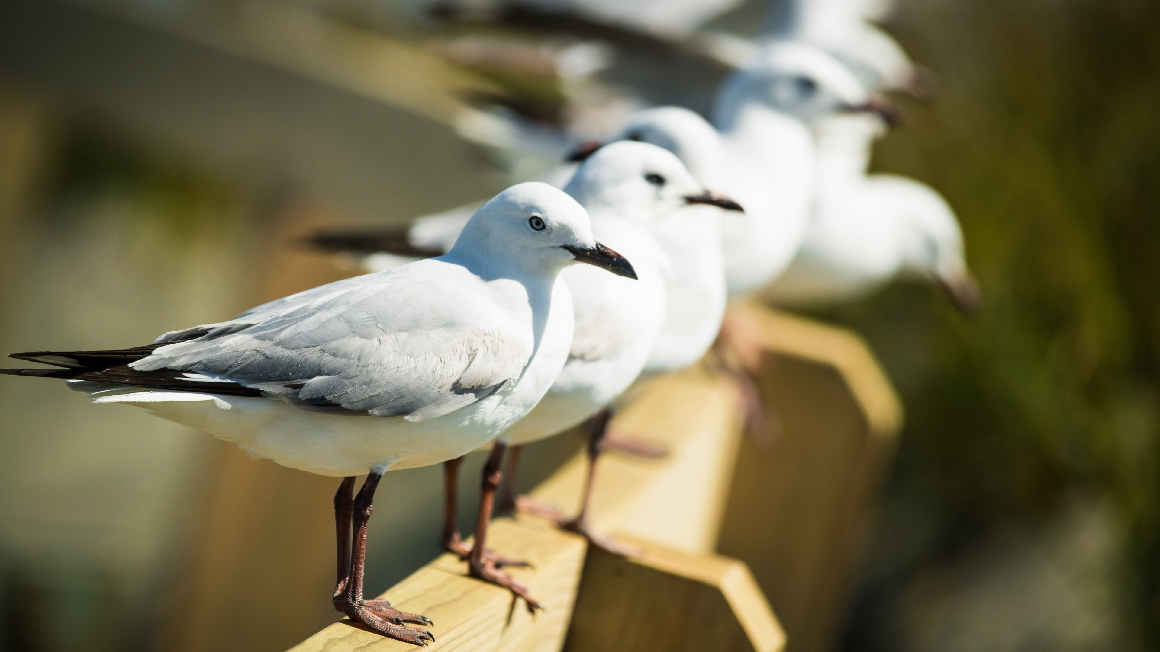 Free Seagull high quality background ID:66857 for hd 4k desktop