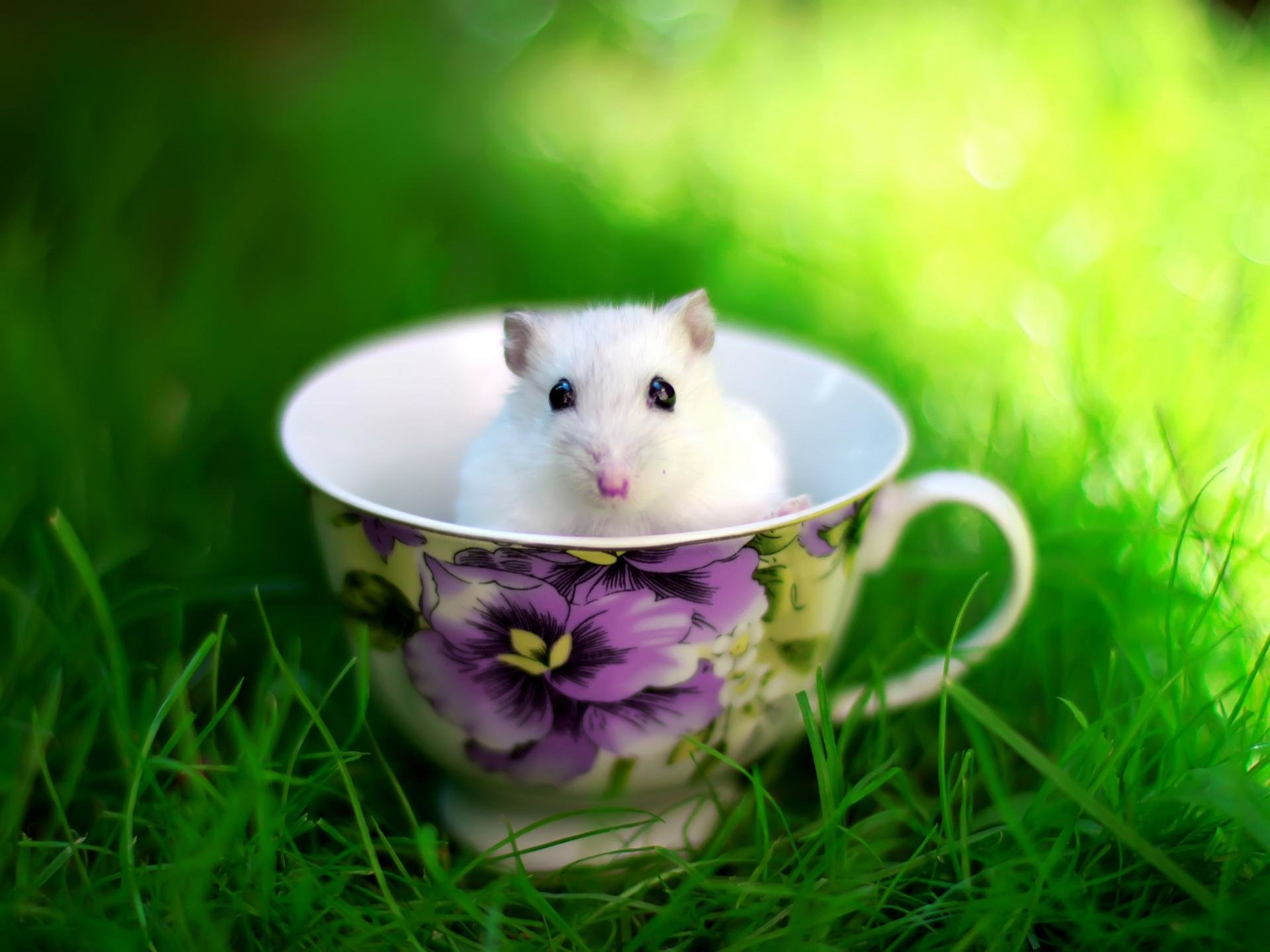 Best Hamster wallpaper ID:234039 for High Resolution hd 1920x1440 computer