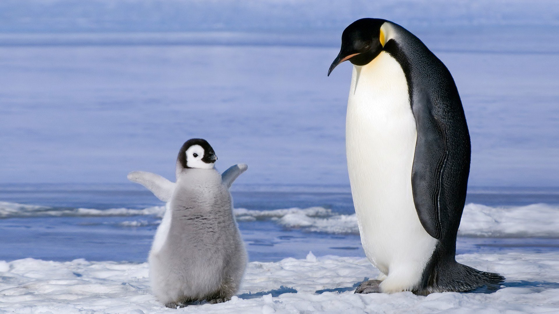 Free Penguin high quality background ID:149245 for hd 1920x1080 desktop
