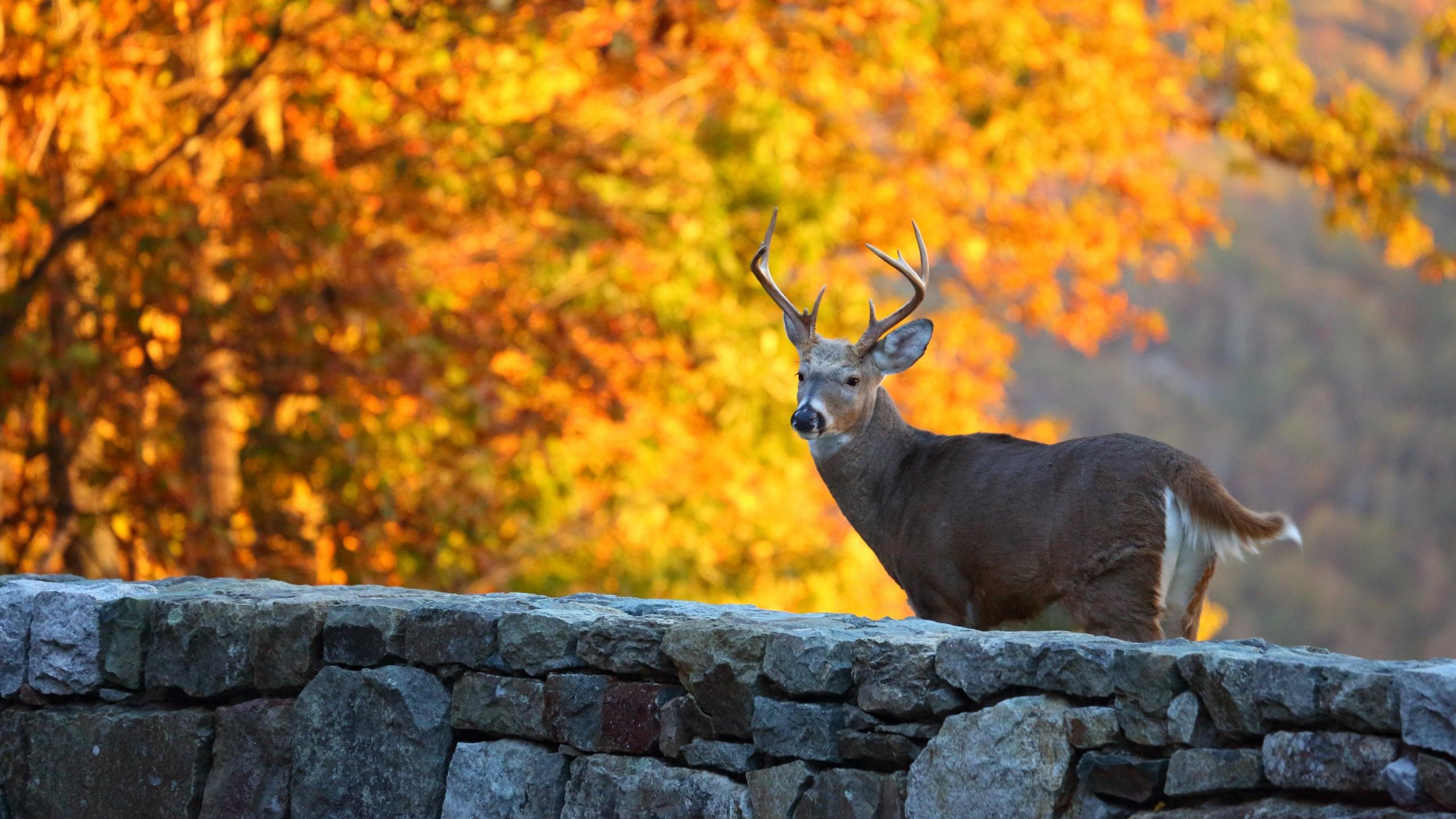 Free Deer high quality wallpaper ID:238737 for hd 2560x1440 PC