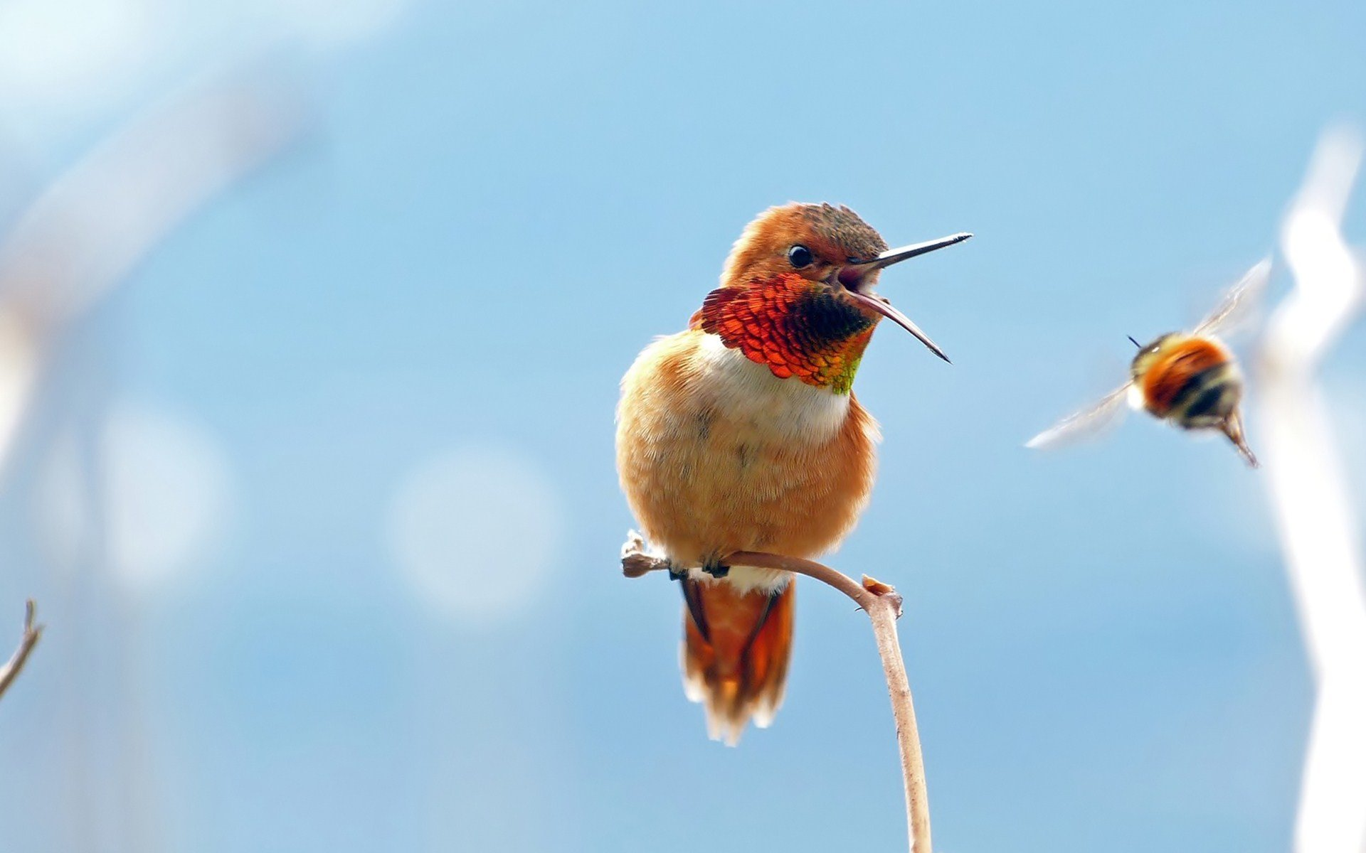 Best Hummingbird wallpaper ID:215679 for High Resolution hd 1920x1200 PC