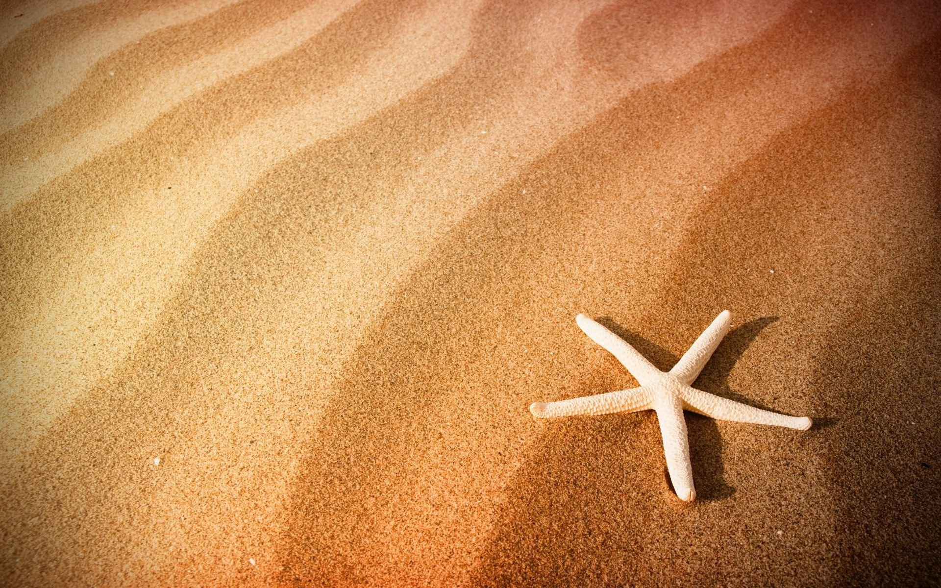 Best Starfish wallpaper ID:29686 for High Resolution hd 1920x1200 computer