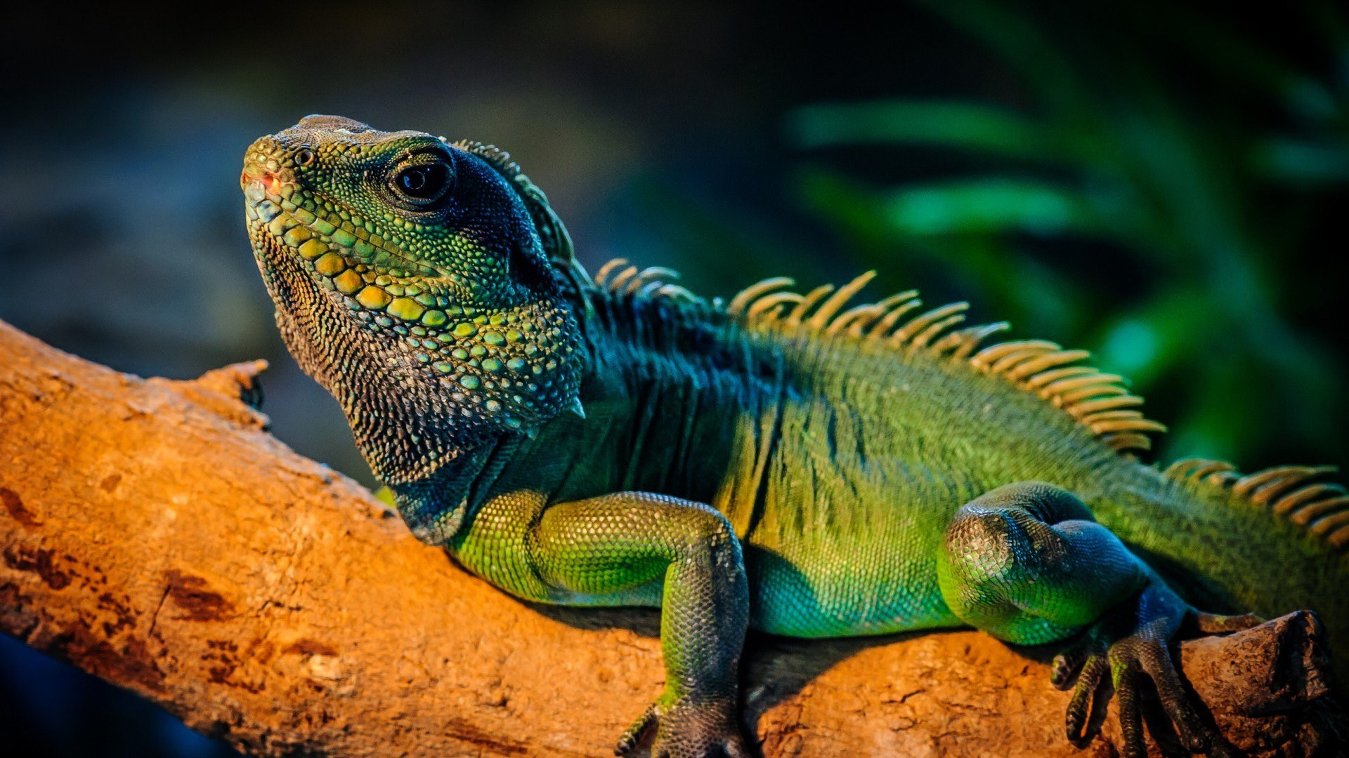 Best Iguana wallpaper ID:380983 for High Resolution full hd 1080p computer