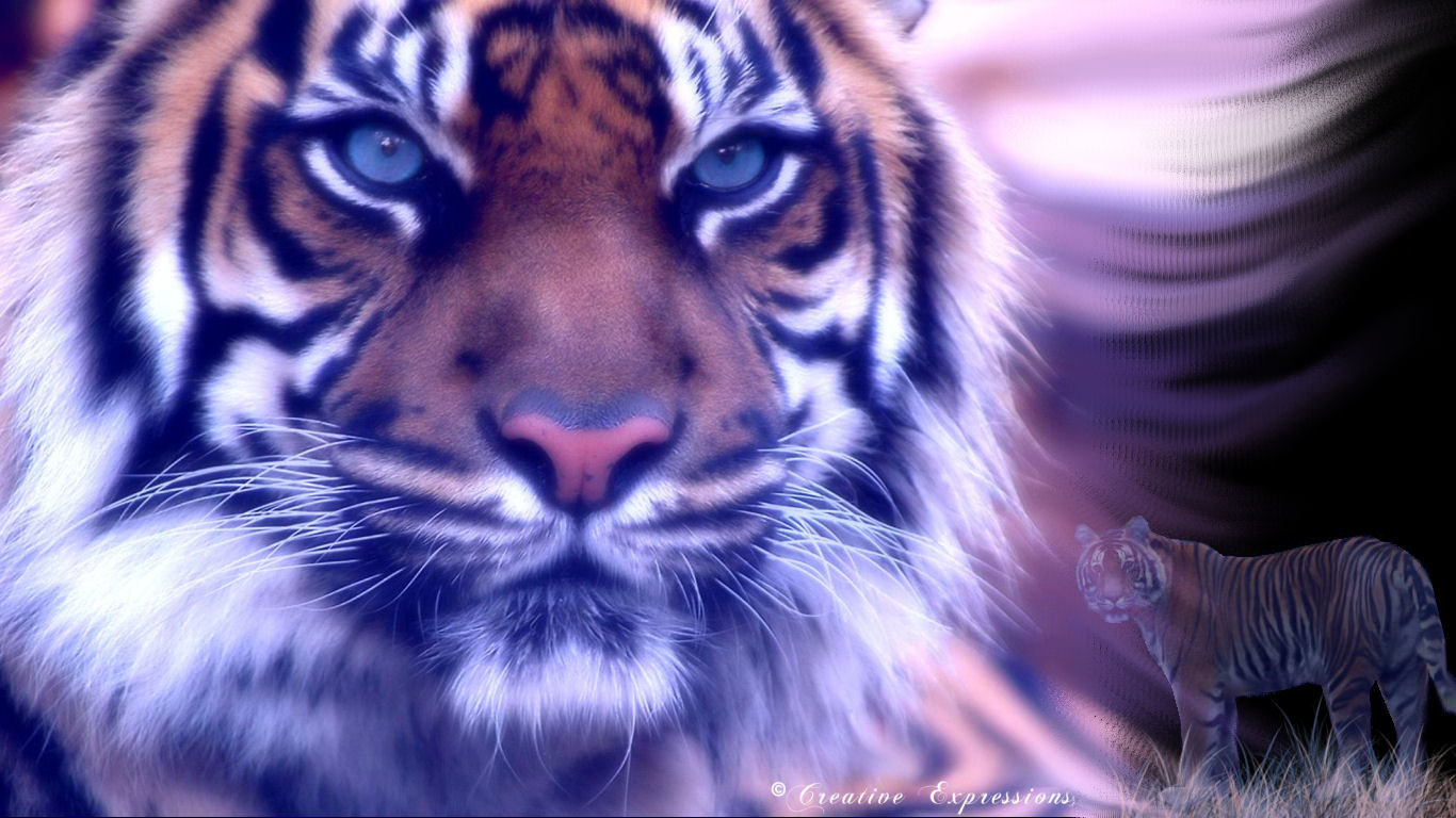 Best Tiger Wallpaper Id 115828 For High Resolution Laptop Pc