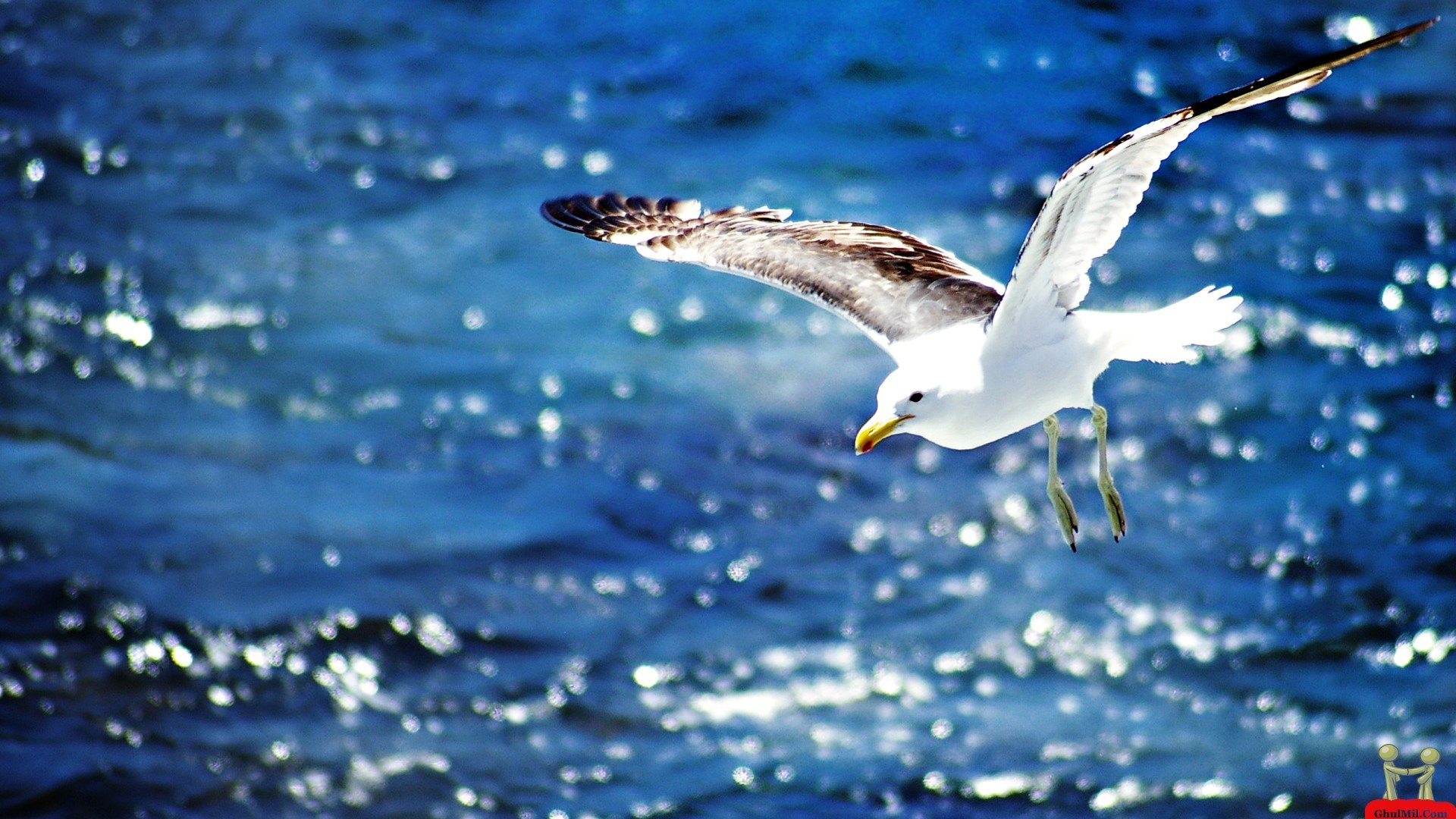 Free Seagull high quality background ID:66841 for full hd PC