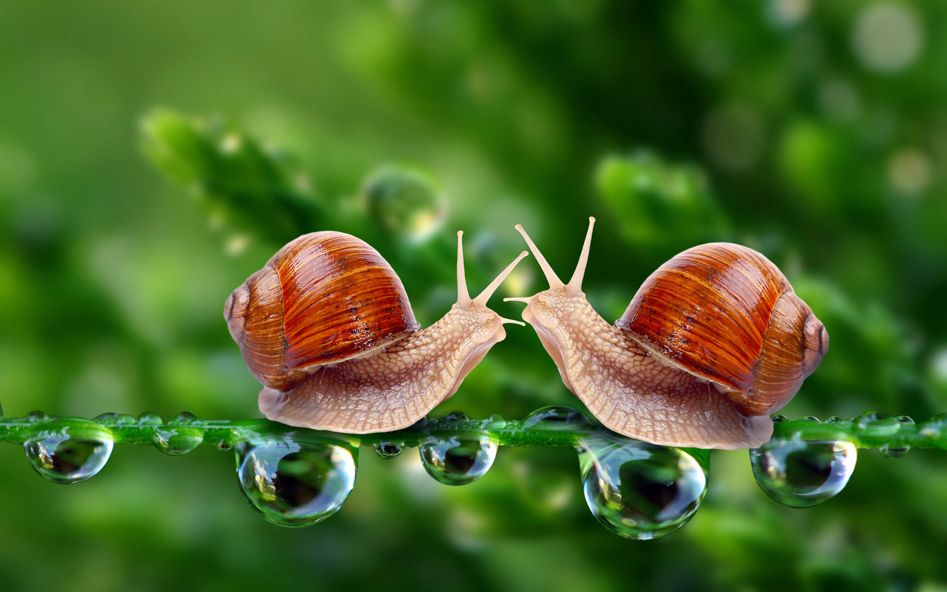 Free Snail high quality wallpaper ID:198754 for hd 1920x1200 PC