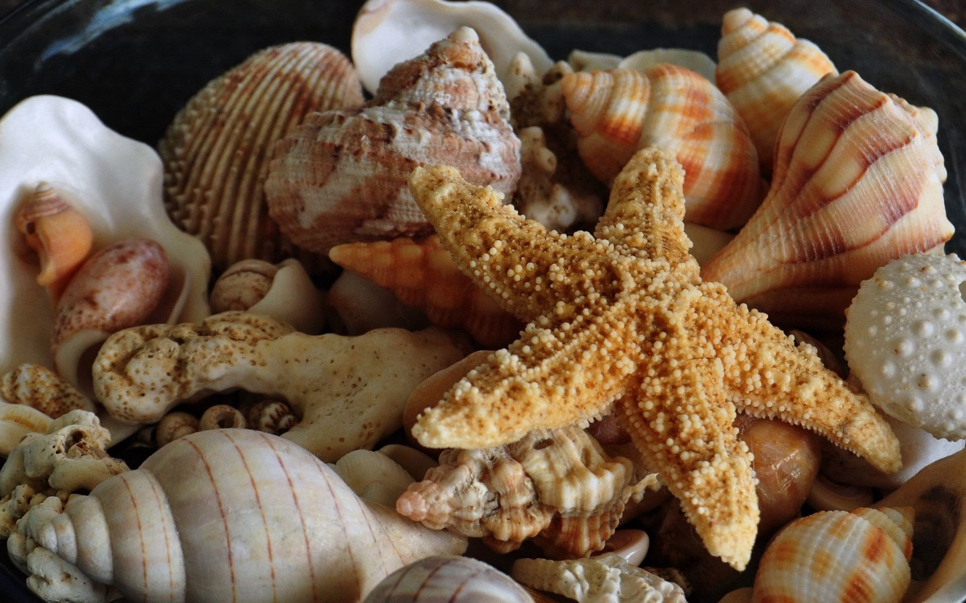 Awesome Starfish free wallpaper ID:29682 for hd 1920x1200 desktop