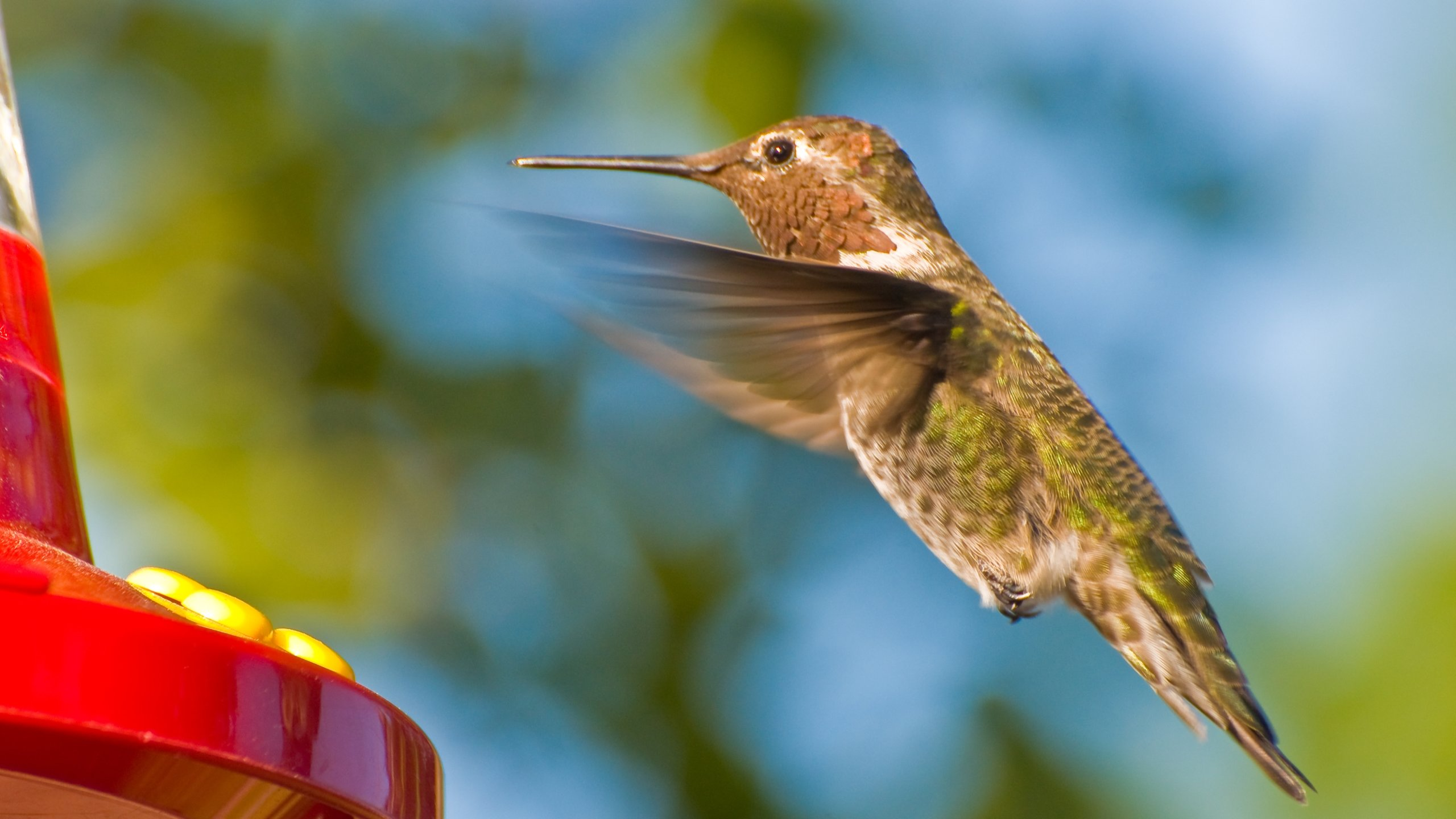 Best Hummingbird wallpaper ID:215760 for High Resolution hd 2560x1440 PC