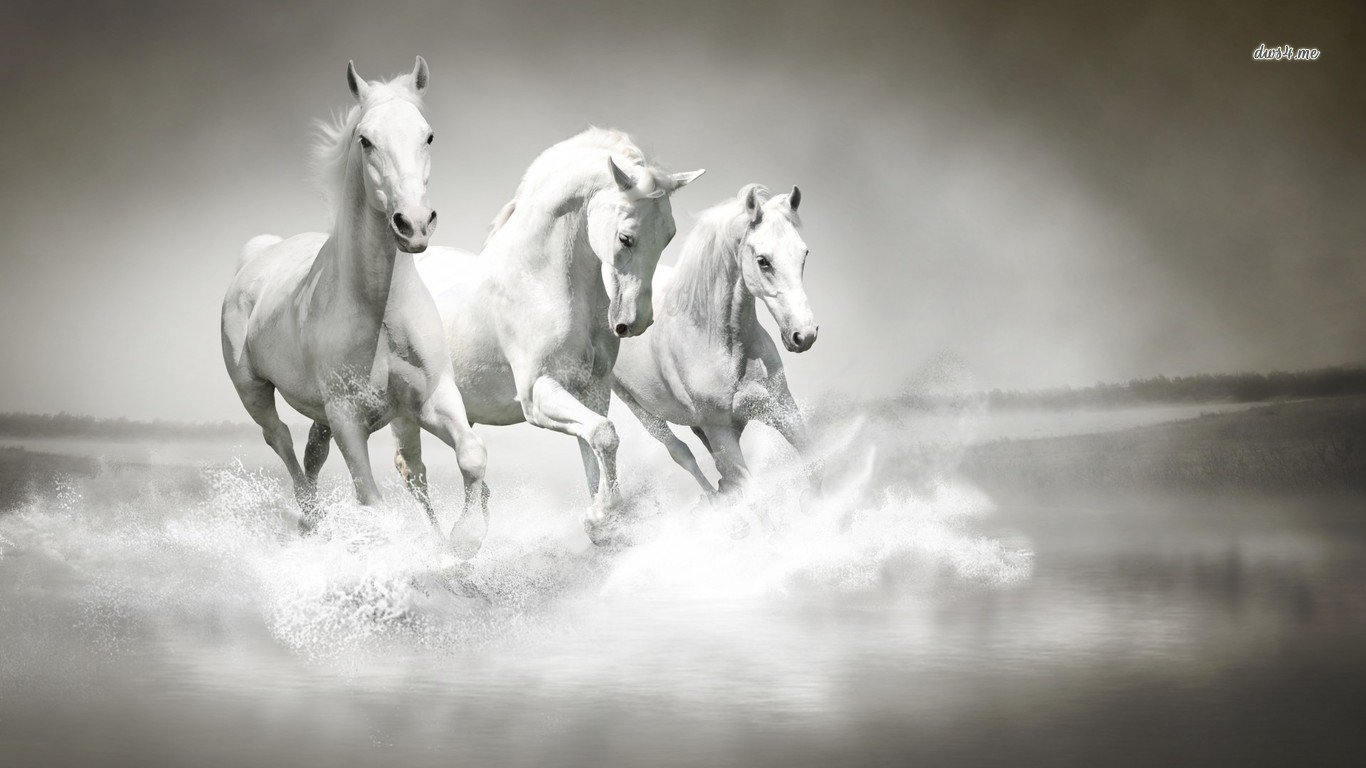 Best Horse background ID:23293 for High Resolution hd 1366x768 desktop