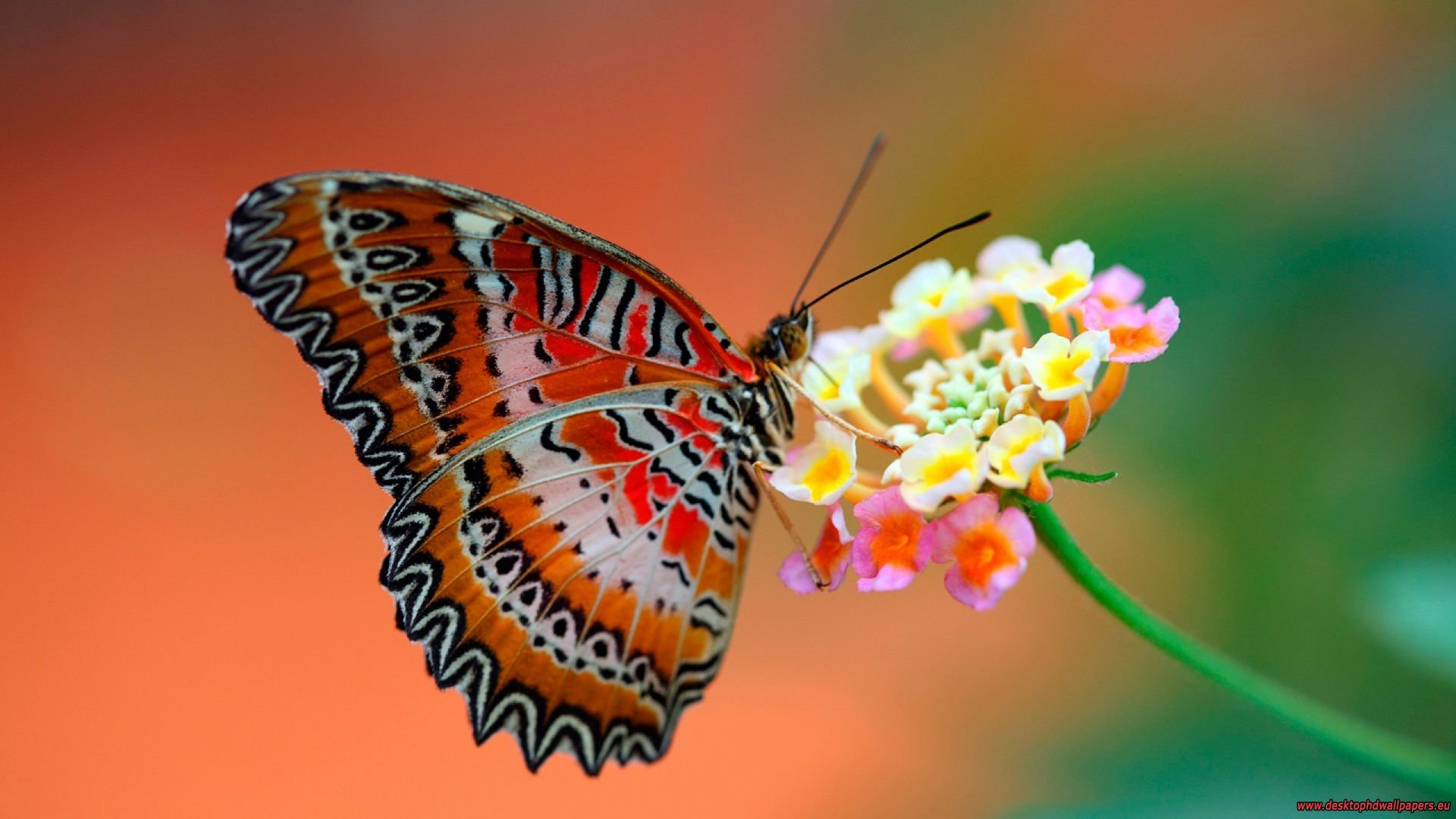 Best Butterfly wallpaper ID:167824 for High Resolution 1080p computer