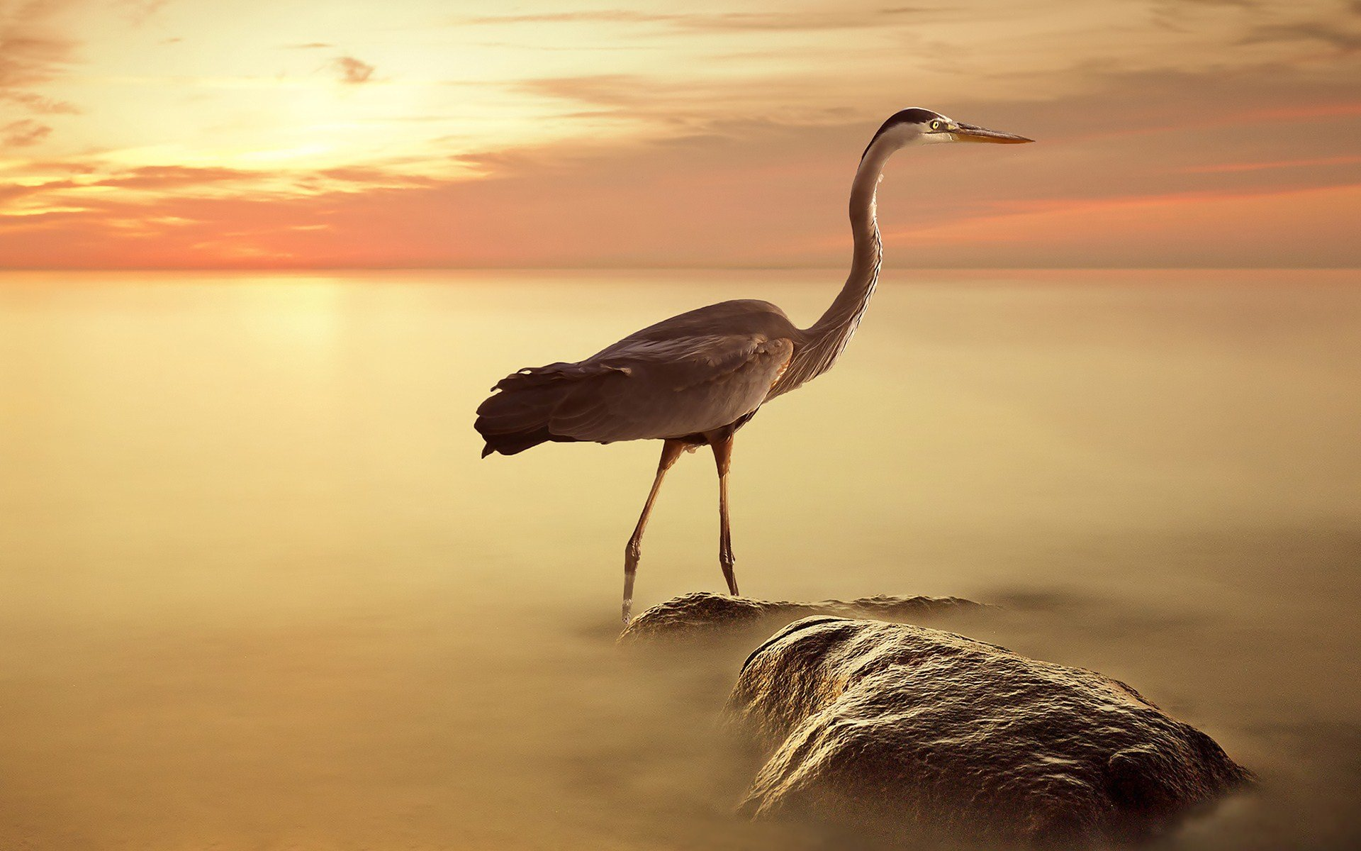Awesome Heron free wallpaper ID:253369 for hd 1920x1200 desktop
