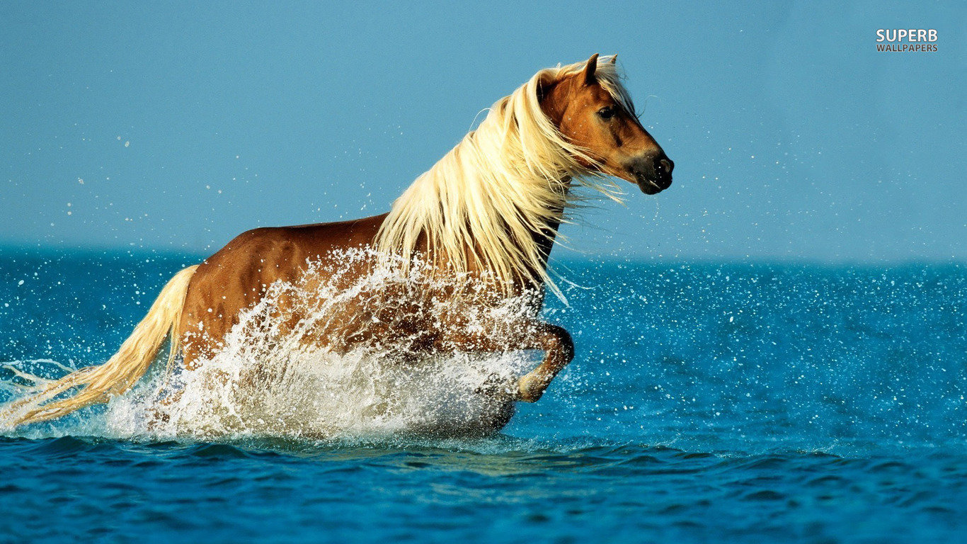 Download 1366x768 laptop Horse desktop background ID:23236 for free
