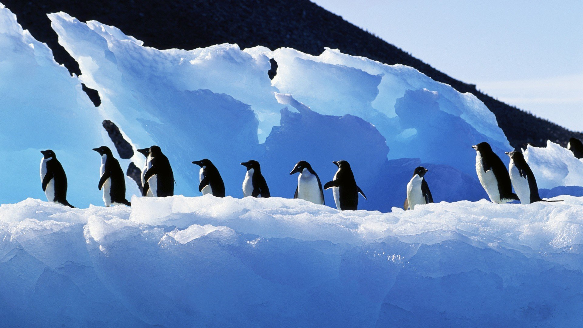 Best Penguin background ID:149318 for High Resolution full hd 1080p PC
