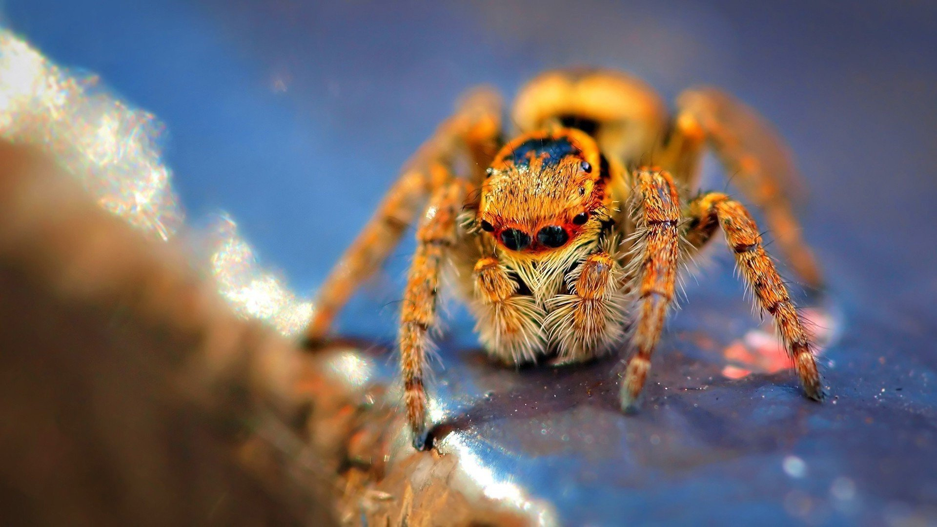 High resolution Spider 1080p background ID:22057 for PC
